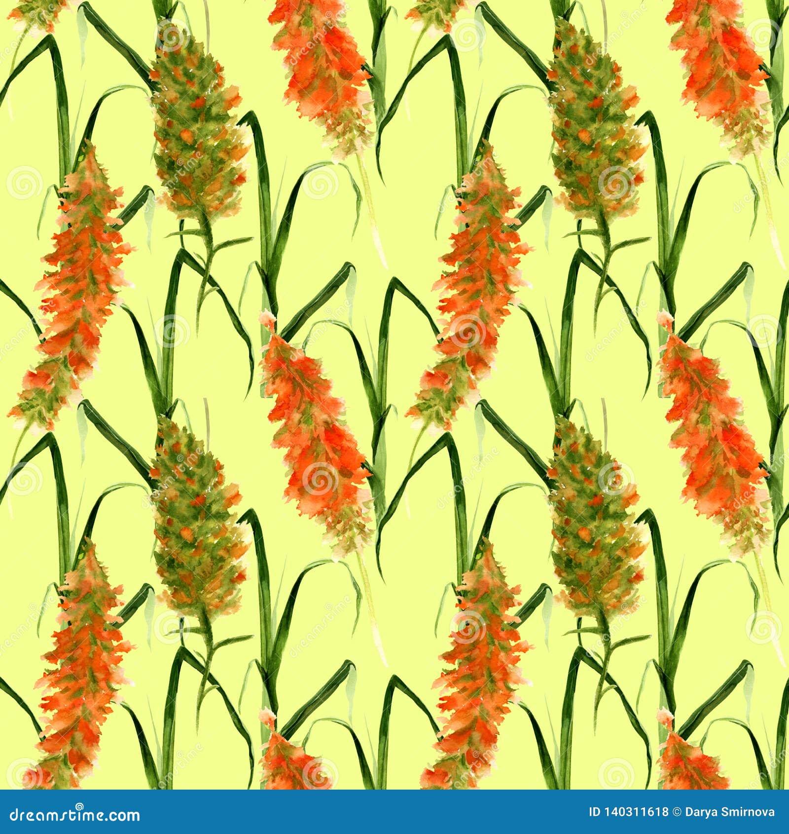 Modèle sans couture tiré par la main avec les fleurs sauvages d aquarelle de pré, les herbes et les herbes jaunes et vertes sur u