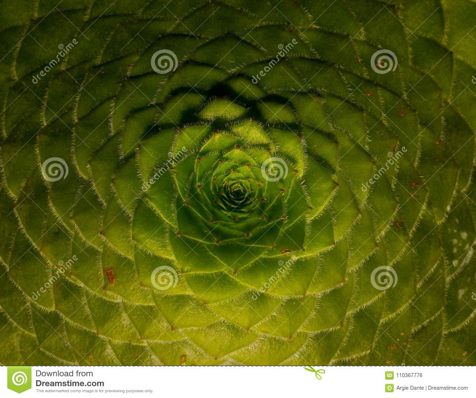 Modèles et ordres sur des usines, ordre de Fibonacci, rapport d or
