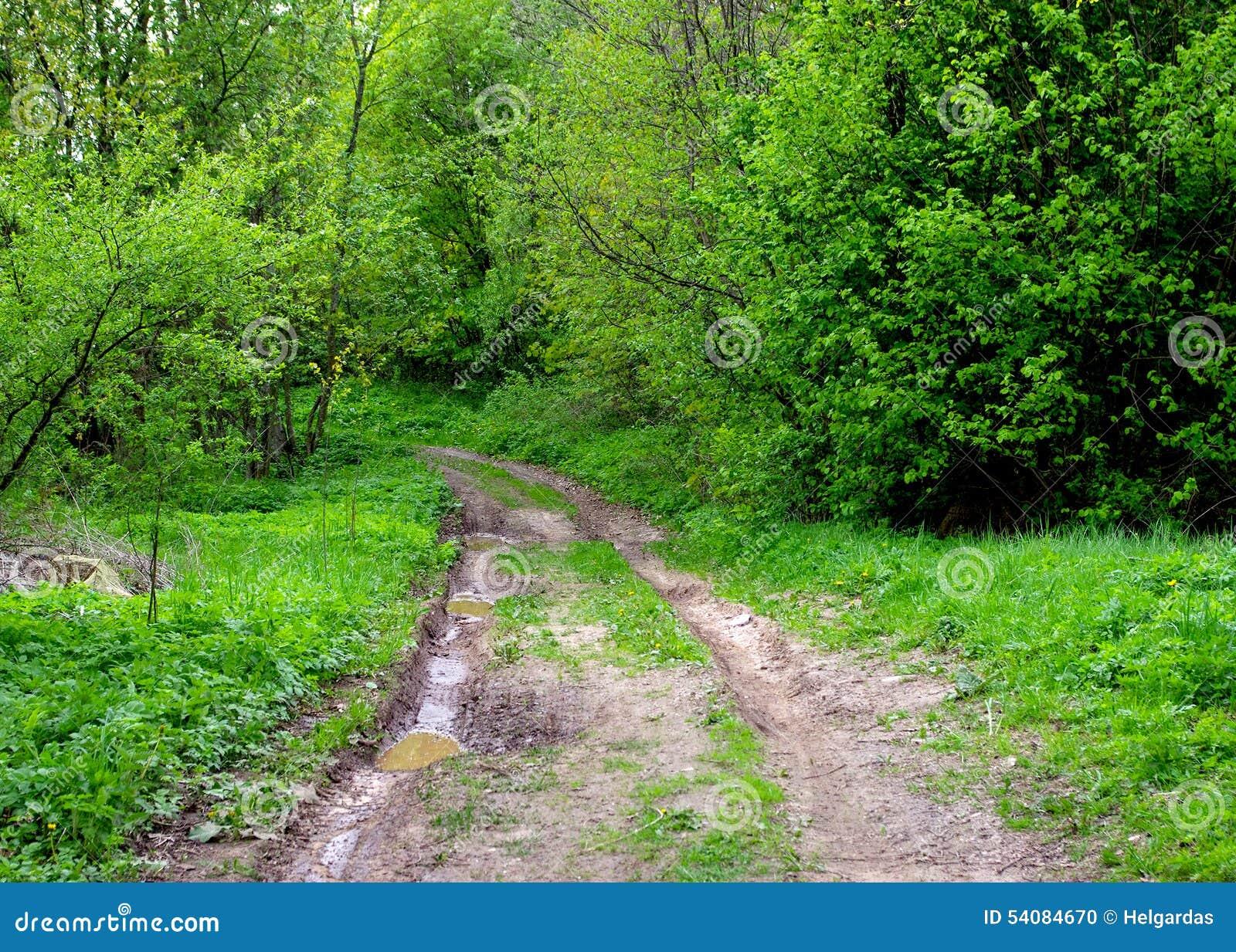 Modderige weg in het bos