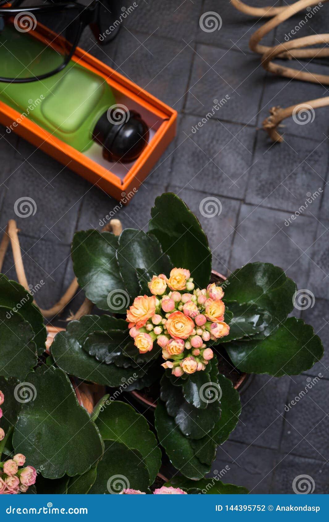 Modedame eingestellt mit Duft und Blume um schwarzen Hintergrund