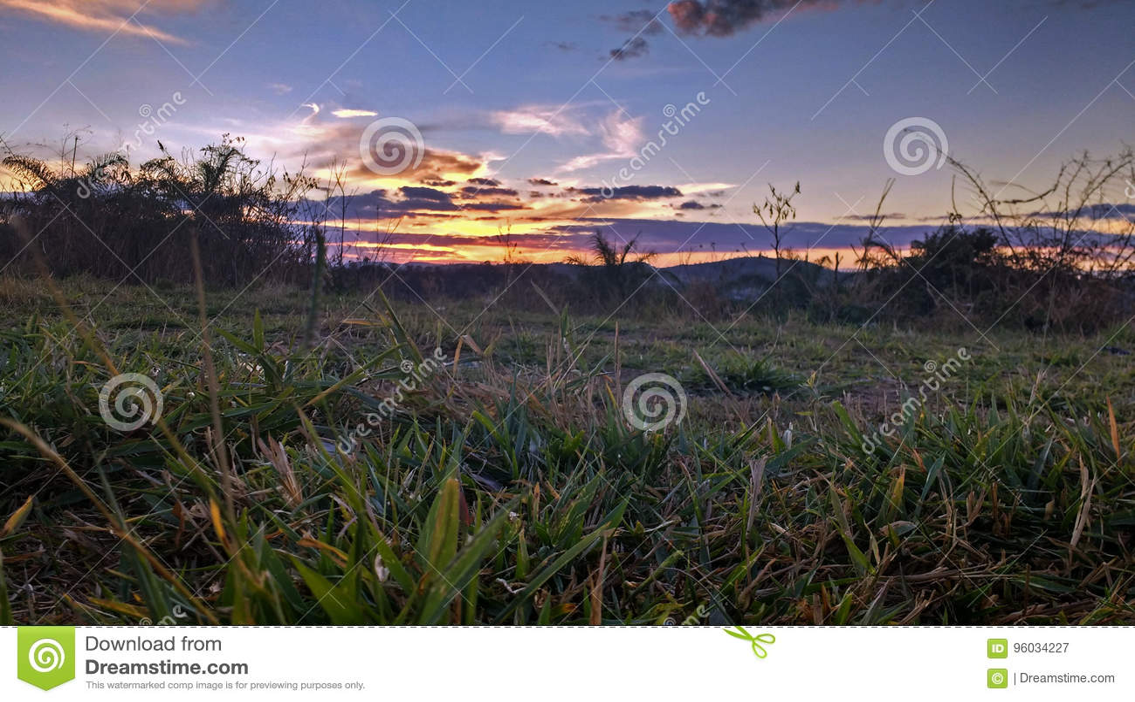 Model 3 d trawy słońca