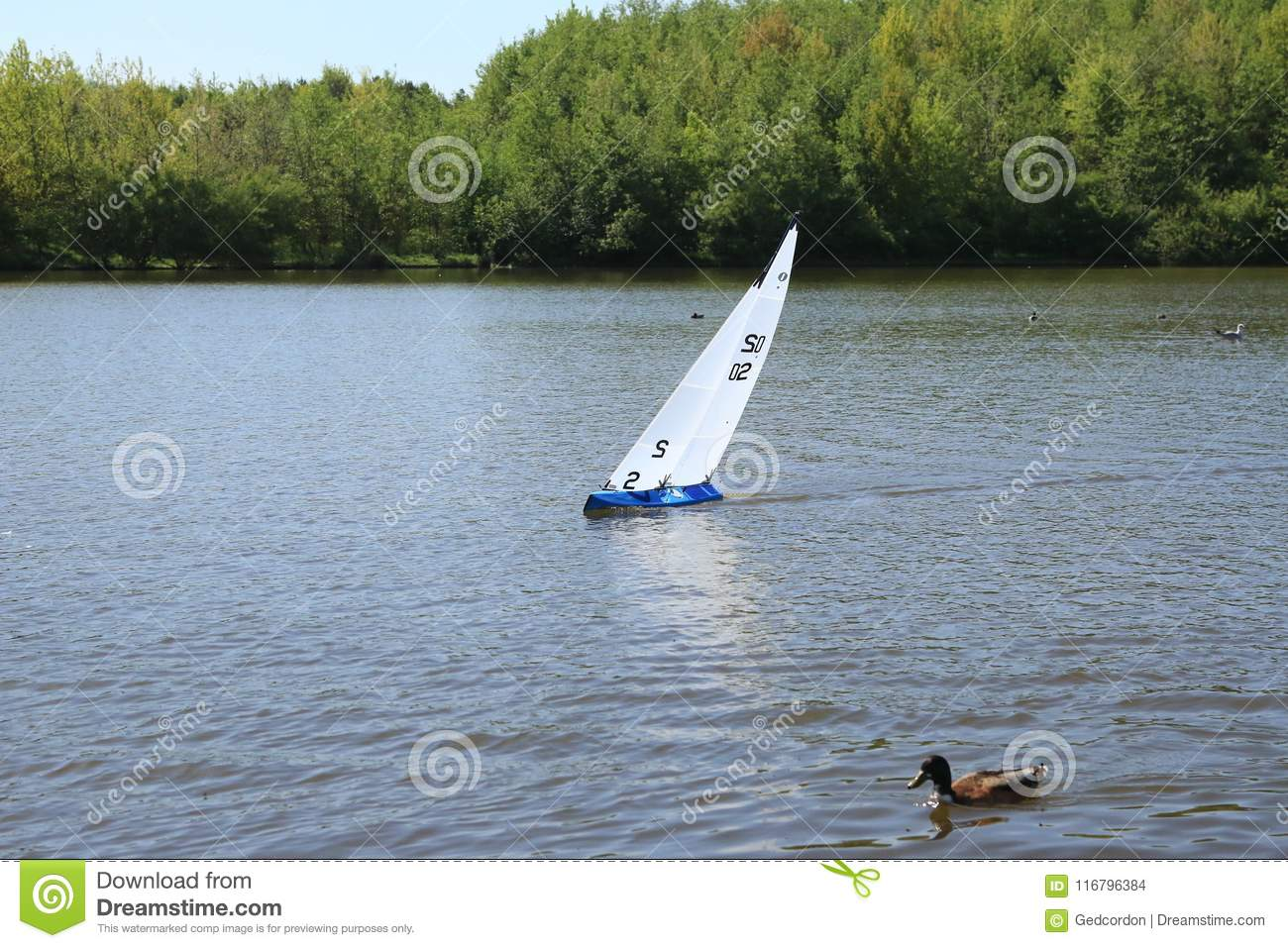 Model Yacht Racing Next To Duck  Stock Photo - Image of large, yacht