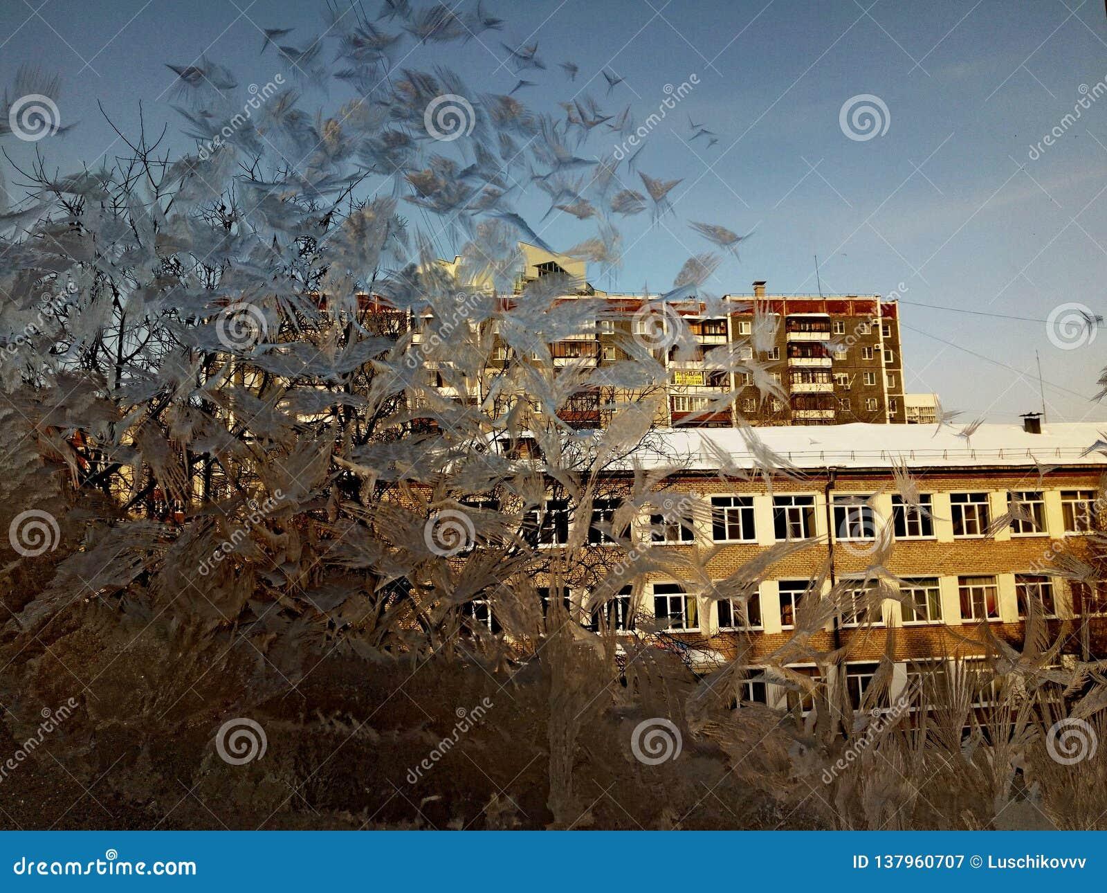 Modeller av frost på exponeringsglasfönstret av huset