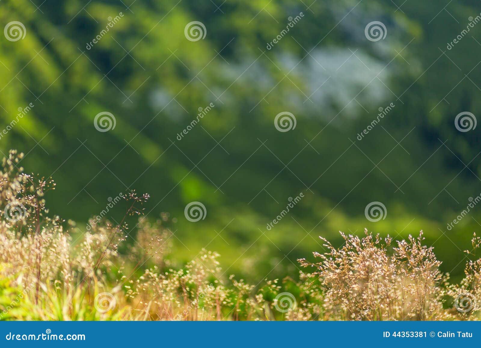 Modello astratto dell erba selvatica