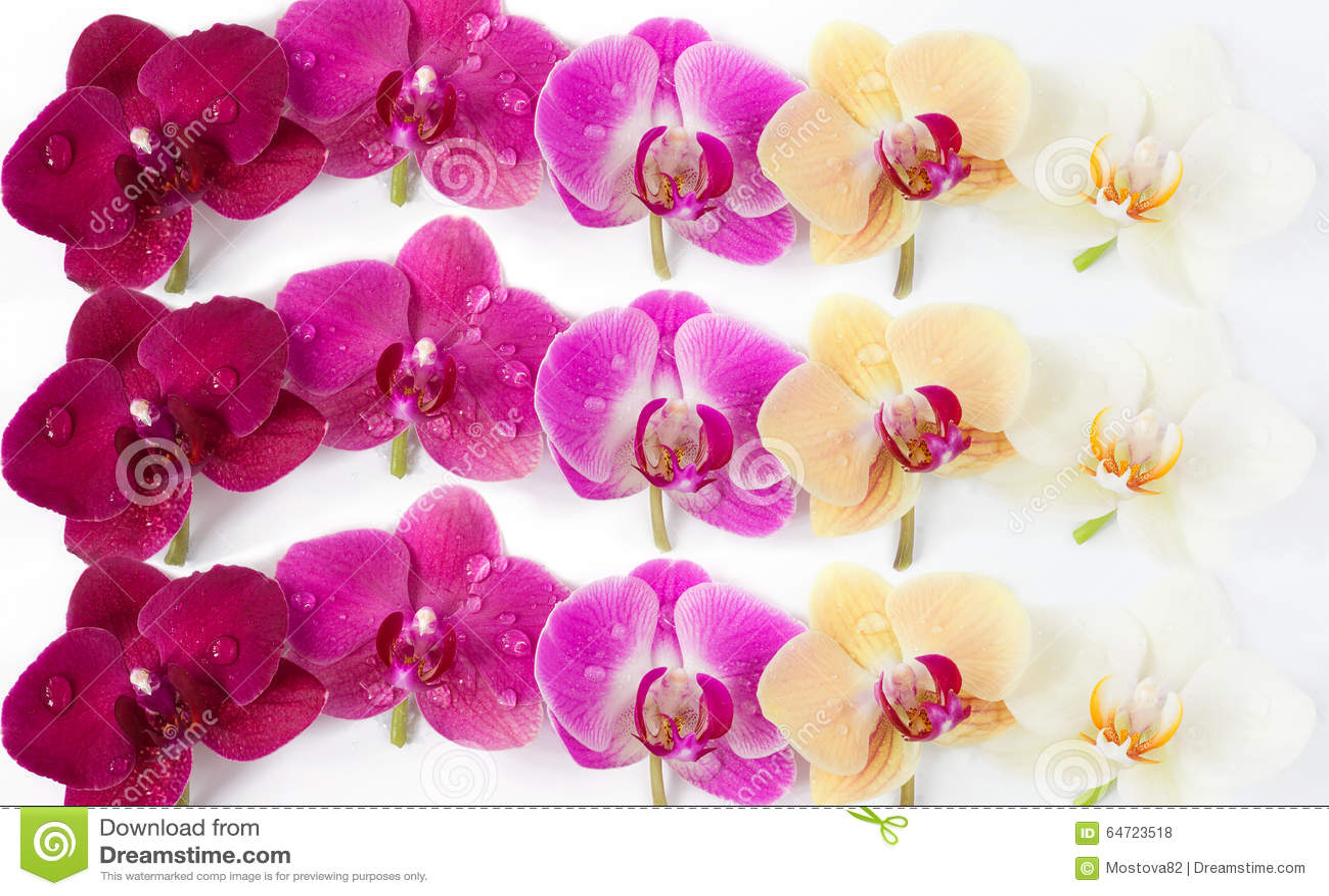 Modello con i fiori delle orchidee su fondo bianco