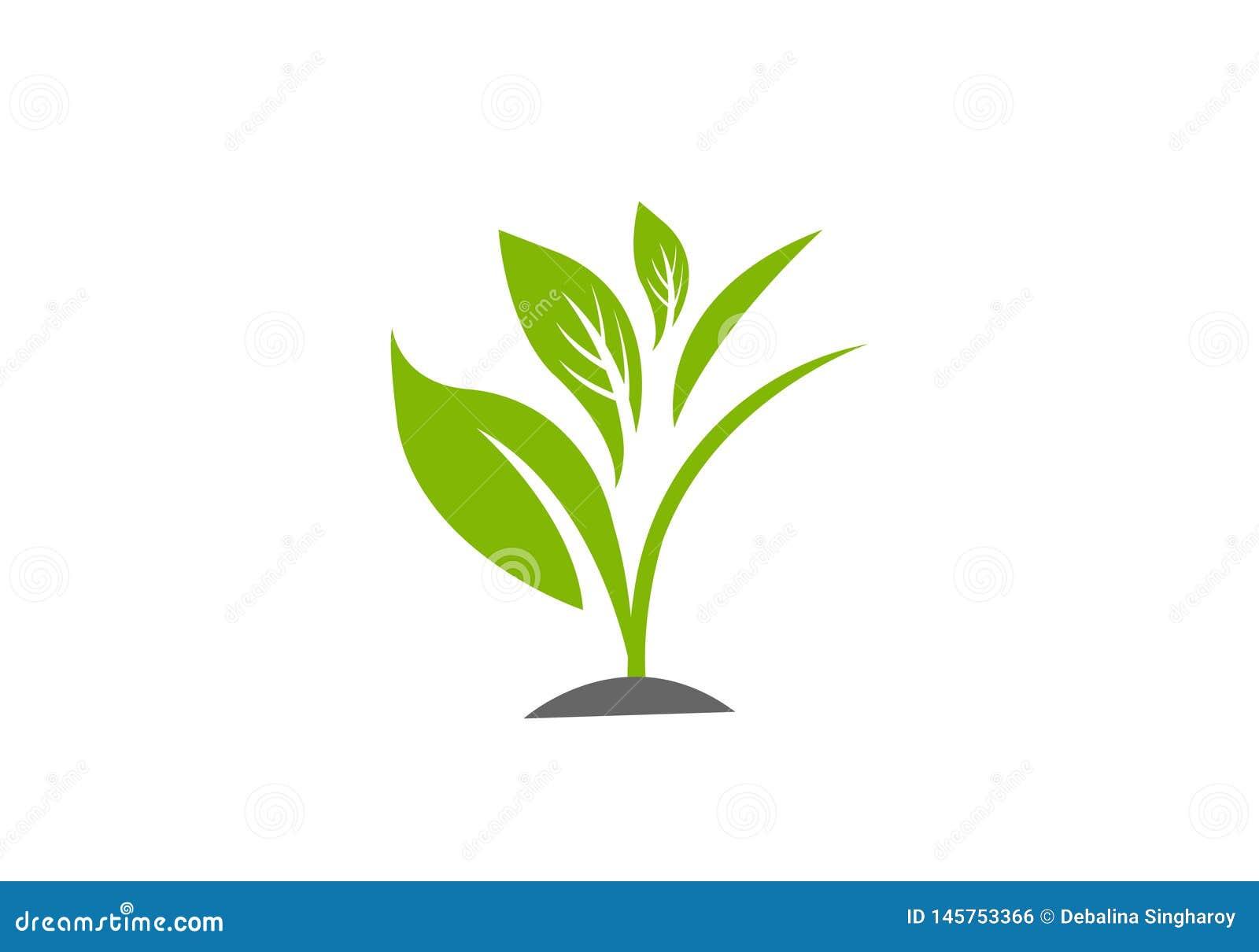 Modello dell illustrazione di vettore della pianta verde