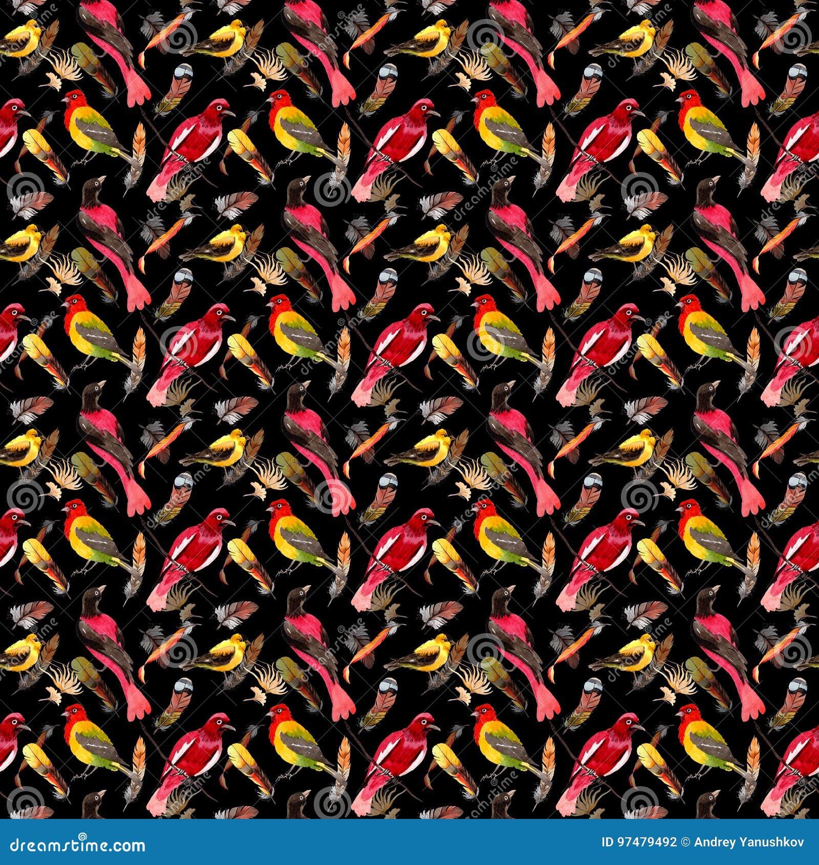 Modello della piuma di uccello dell acquerello dall ala