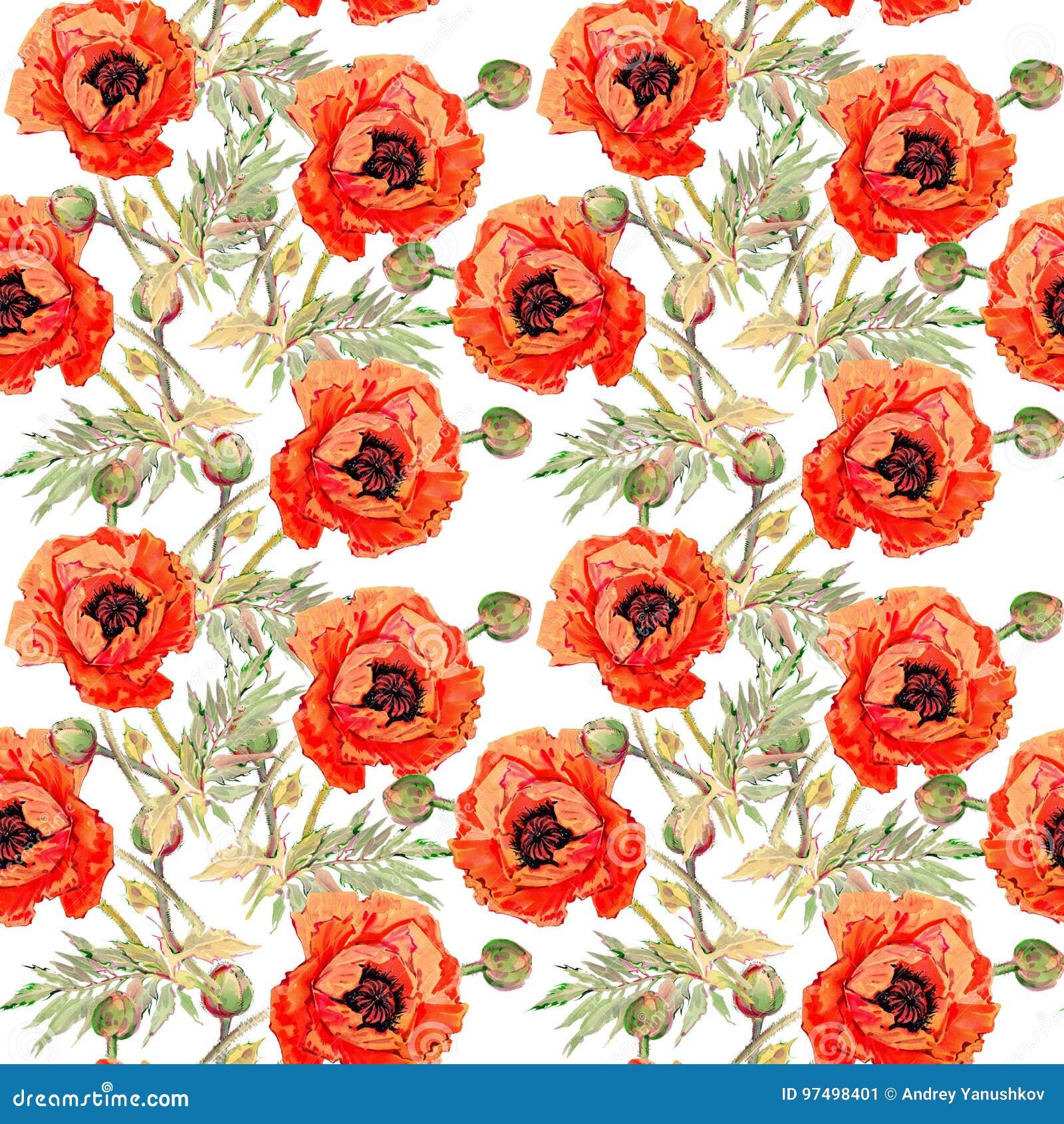 Modello di fiore del papavero del Wildflower in uno stile dell acquerello