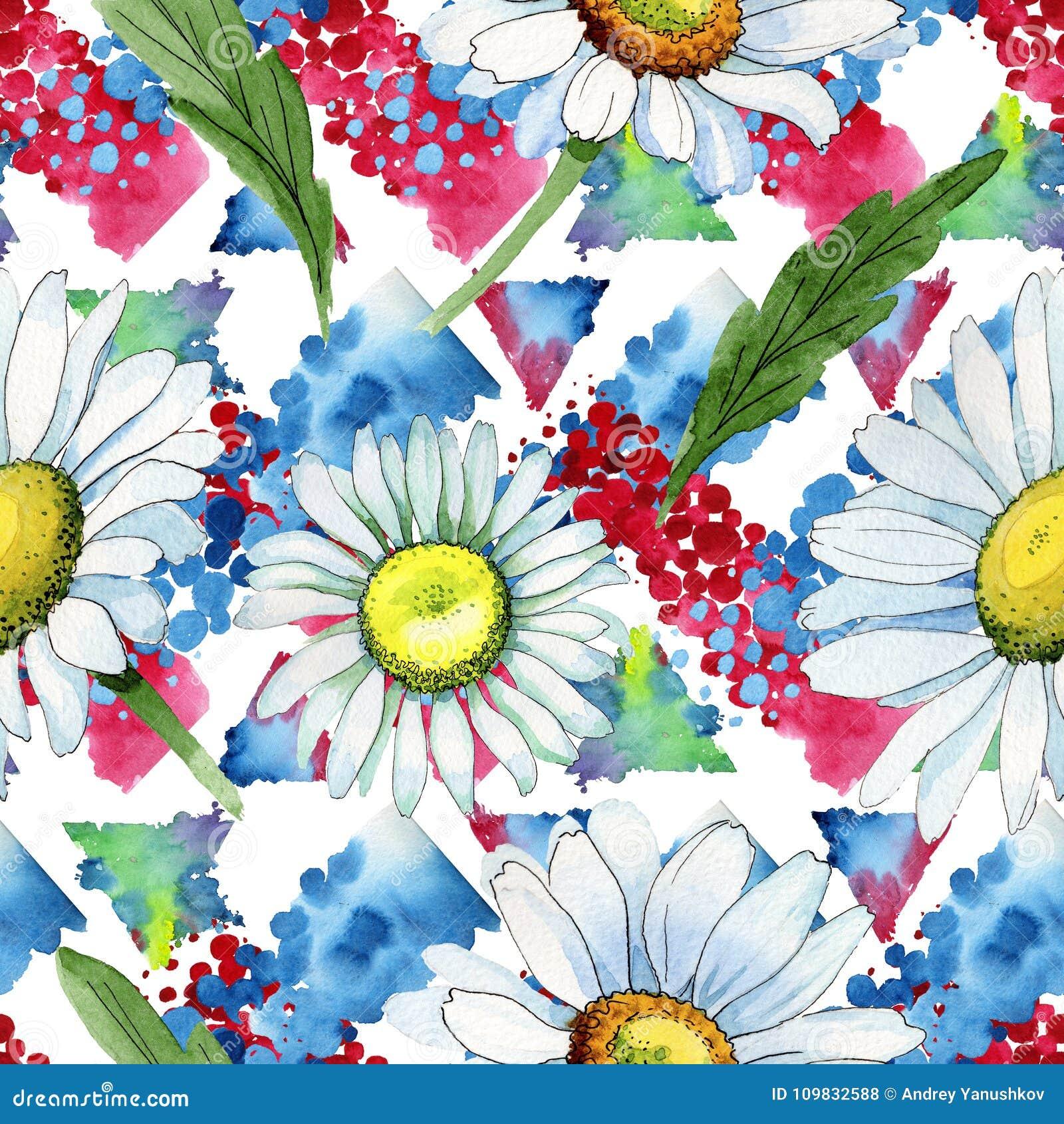 Modello di fiore della camomilla del Wildflower in uno stile dell acquerello