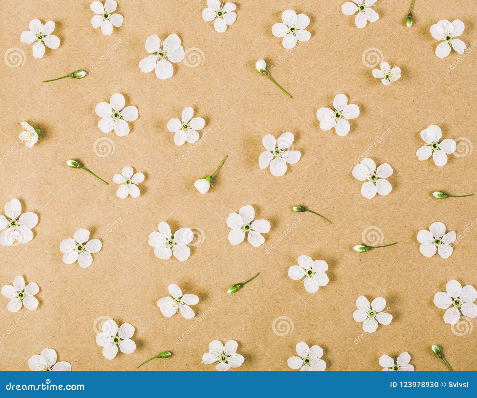 Modello floreale fatto dei fiori e dei germogli bianchi della molla sul fondo della carta marrone Disposizione piana