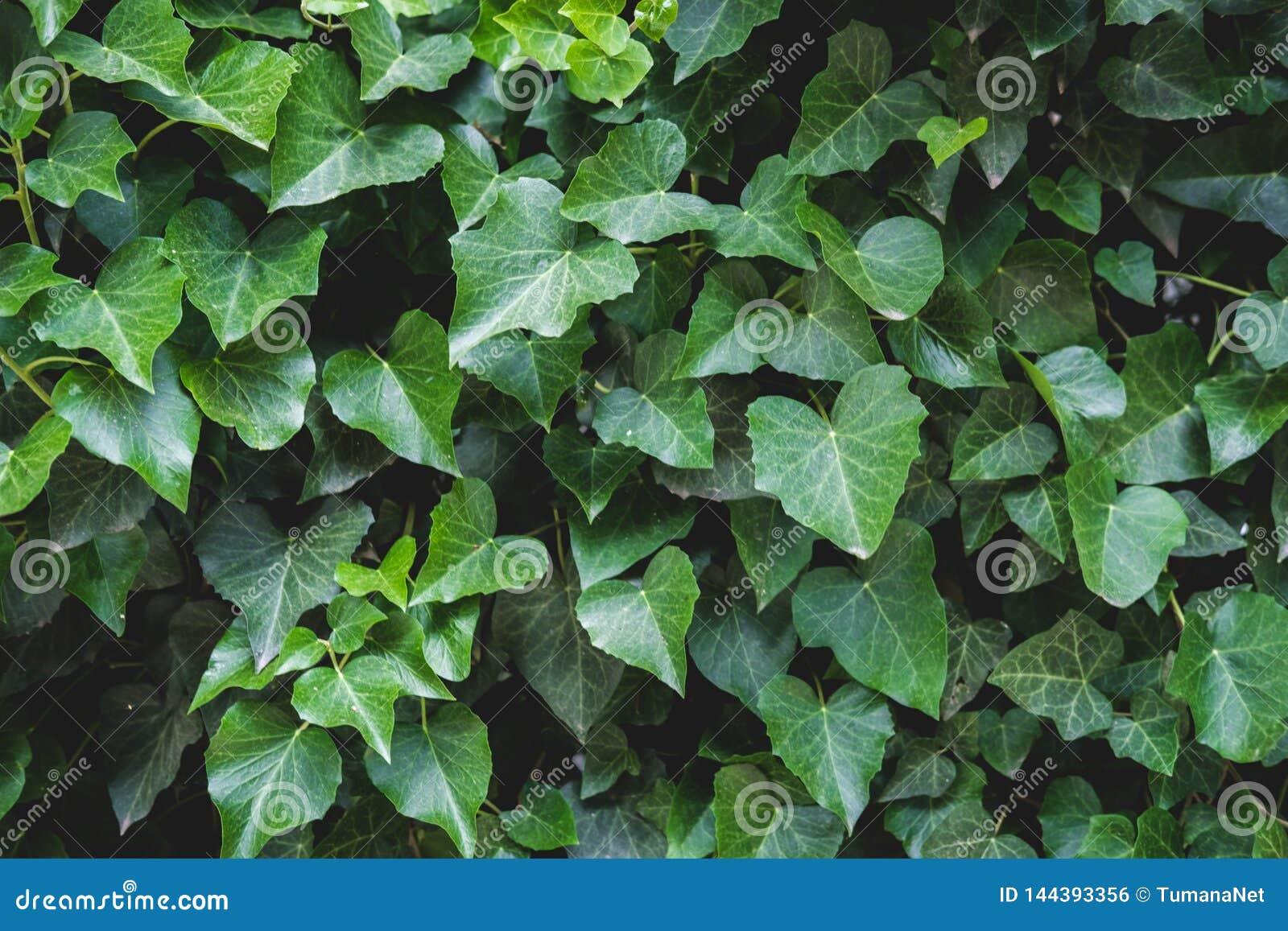Modello floreale verde delle foglie Sfondo naturale da sopra Vista superiore