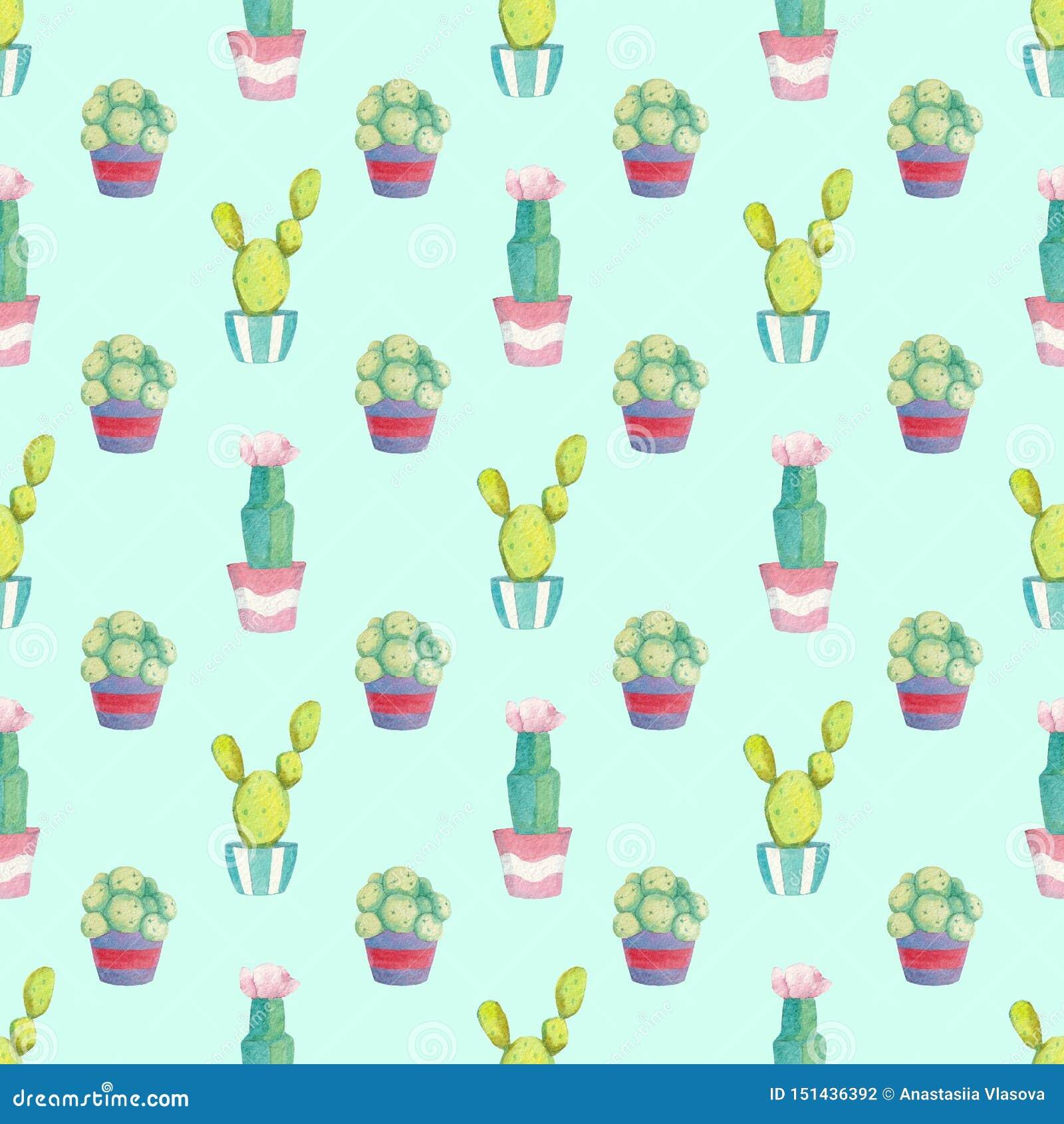 Modello senza cuciture con differenti cactus verdi in di vasi colorati multi