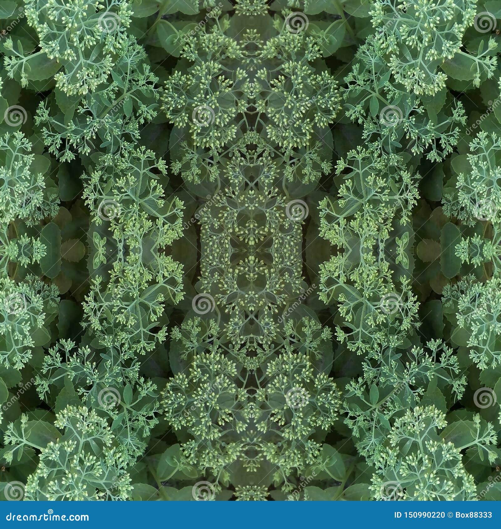 Modello senza cuciture degli elementi naturali della pianta Germogli di fiore leggeri di cavolo e delle foglie verdi ornamentali