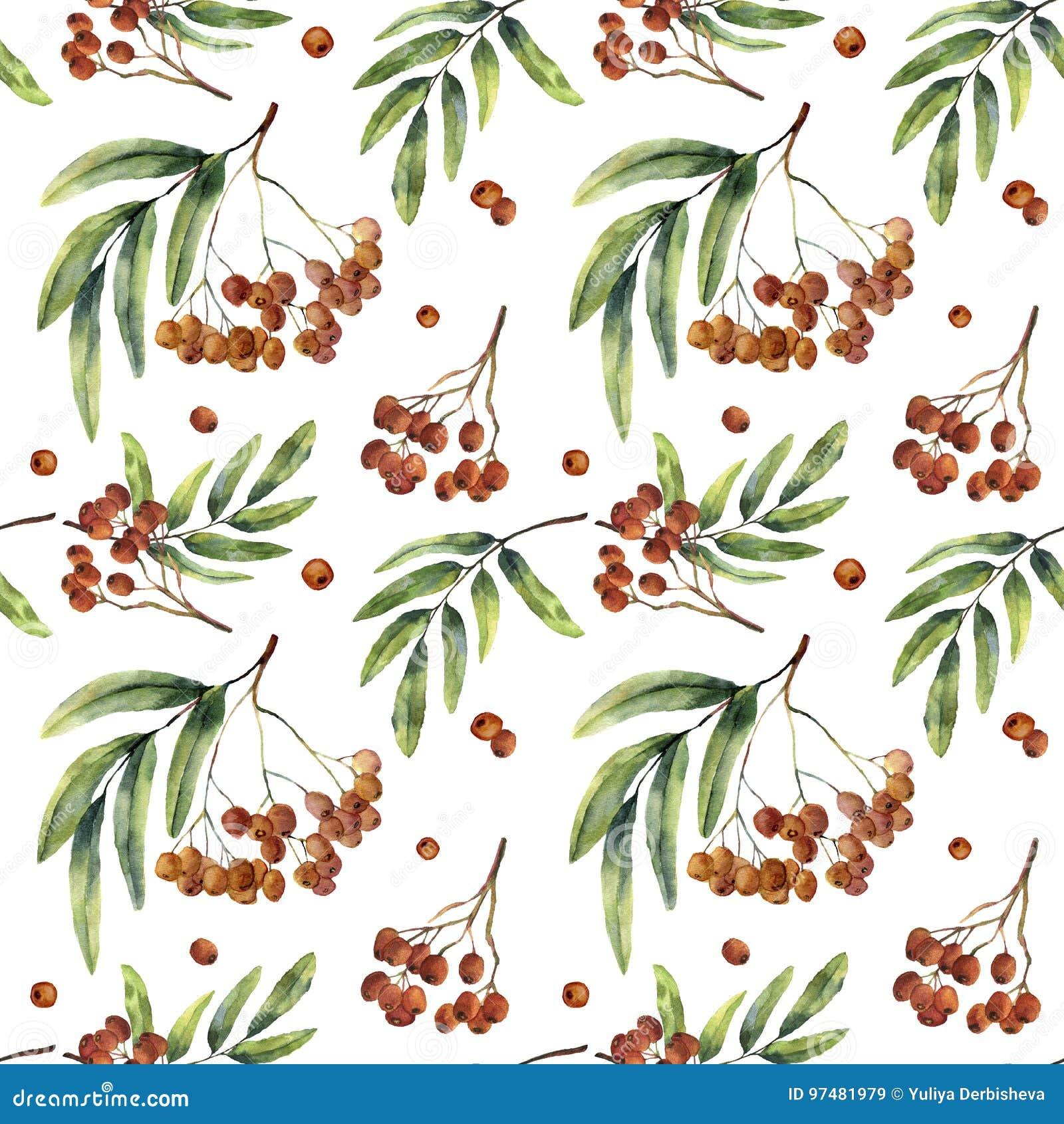 Modello senza cuciture dell acquerello con la sorba Frutta dipinta a mano della montagna-ashe con le foglie ed il ramo isolati su