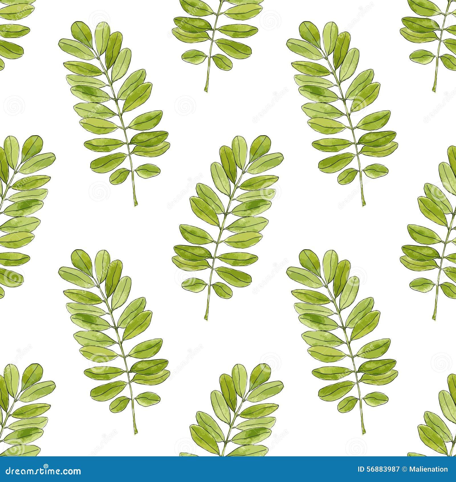 Modello senza cuciture dell acquerello con le foglie dell acacia Fondo disegnato a mano per l imballaggio, tessuto di vettore