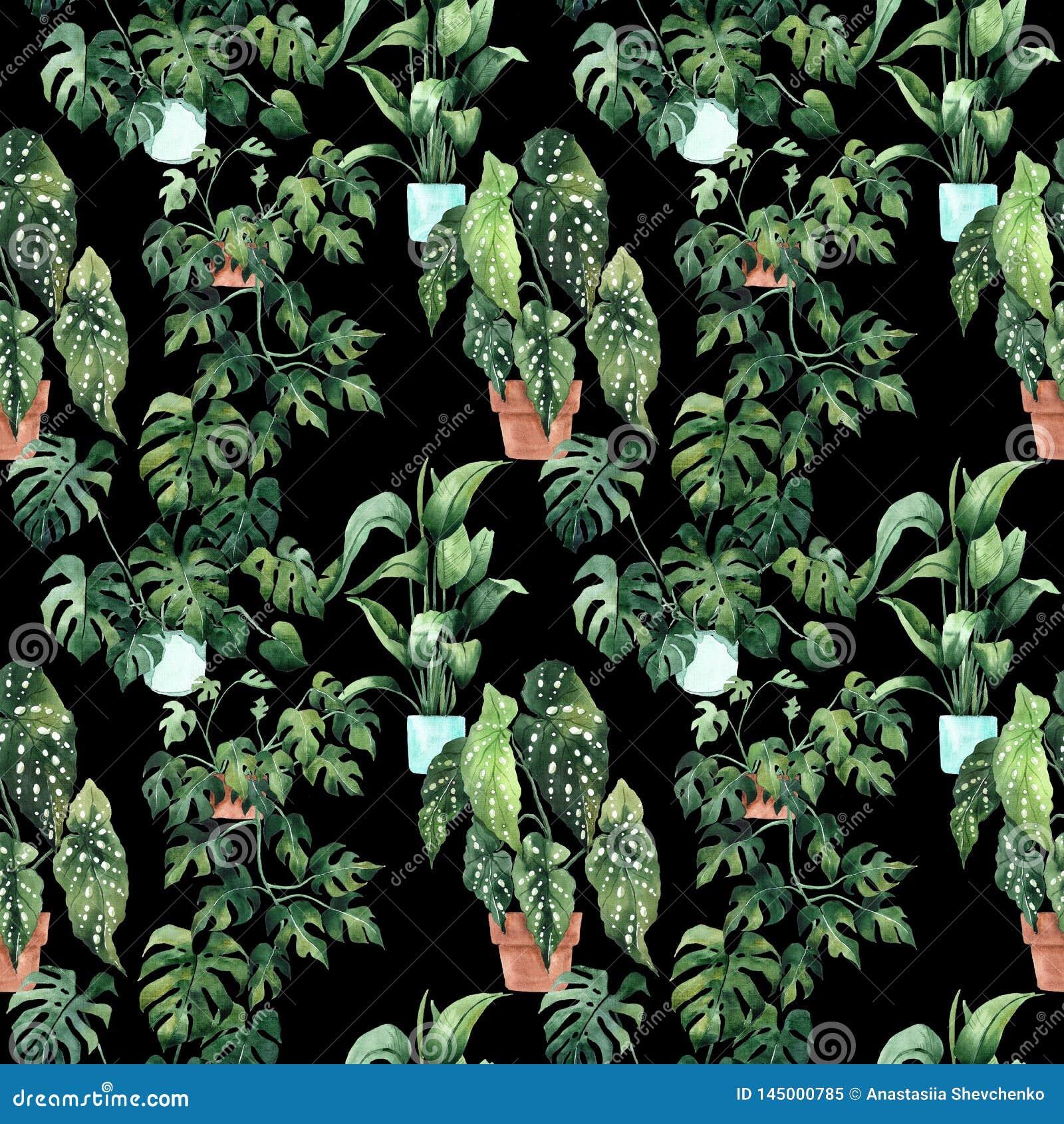 Modello senza cuciture dell acquerello con le foglie tropicali e le foglie delle piante da appartamento greenery succulente Illus