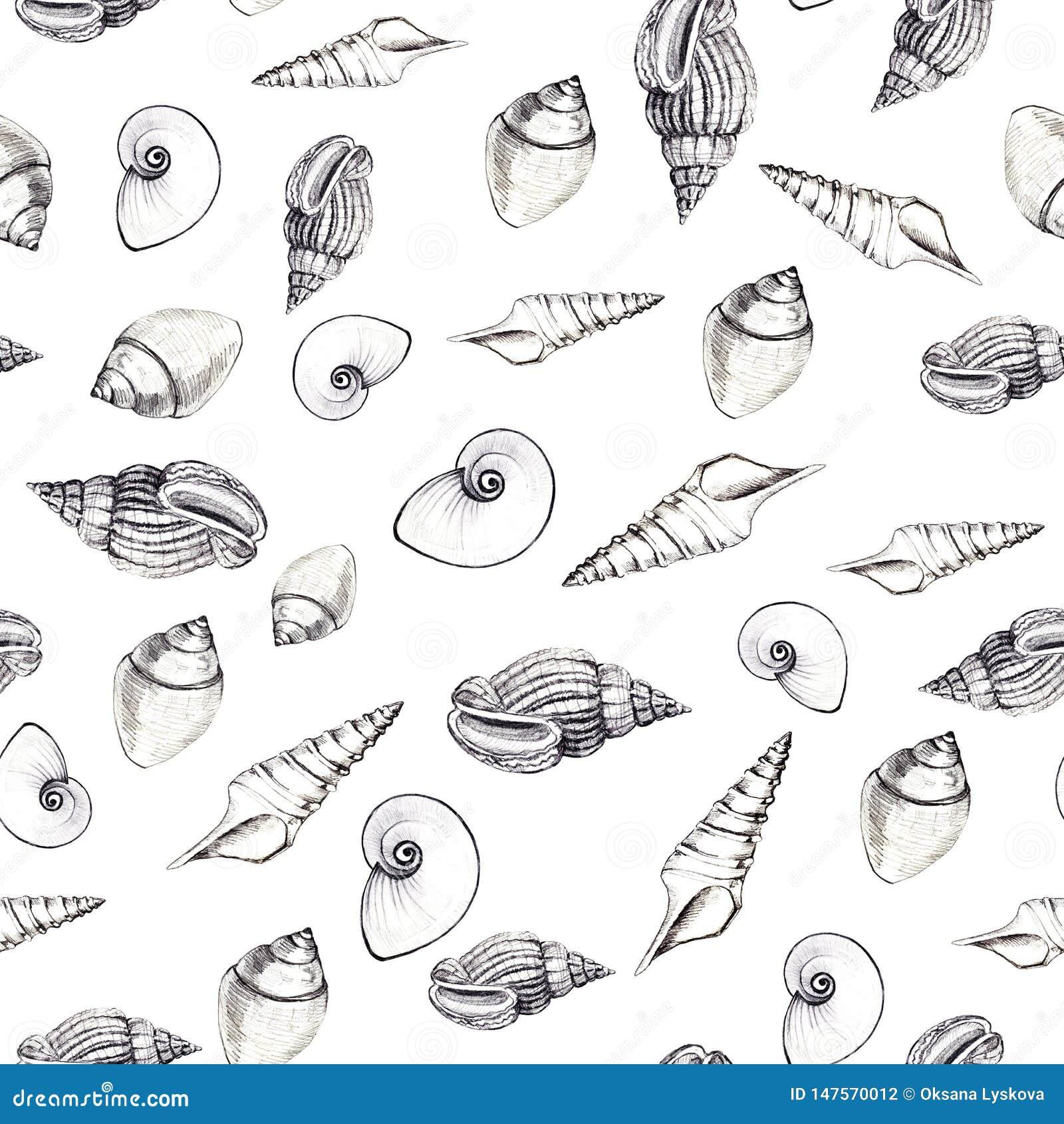 Modello senza cuciture delle conchiglie su fondo bianco Grafici manuali Progettazione per gli ambiti di provenienza, le carte da
