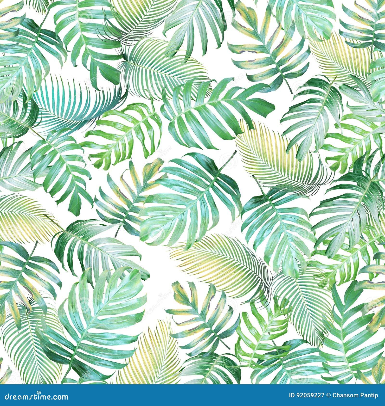 Modello senza cuciture delle foglie tropicali del philodendron di Monstera e del PA