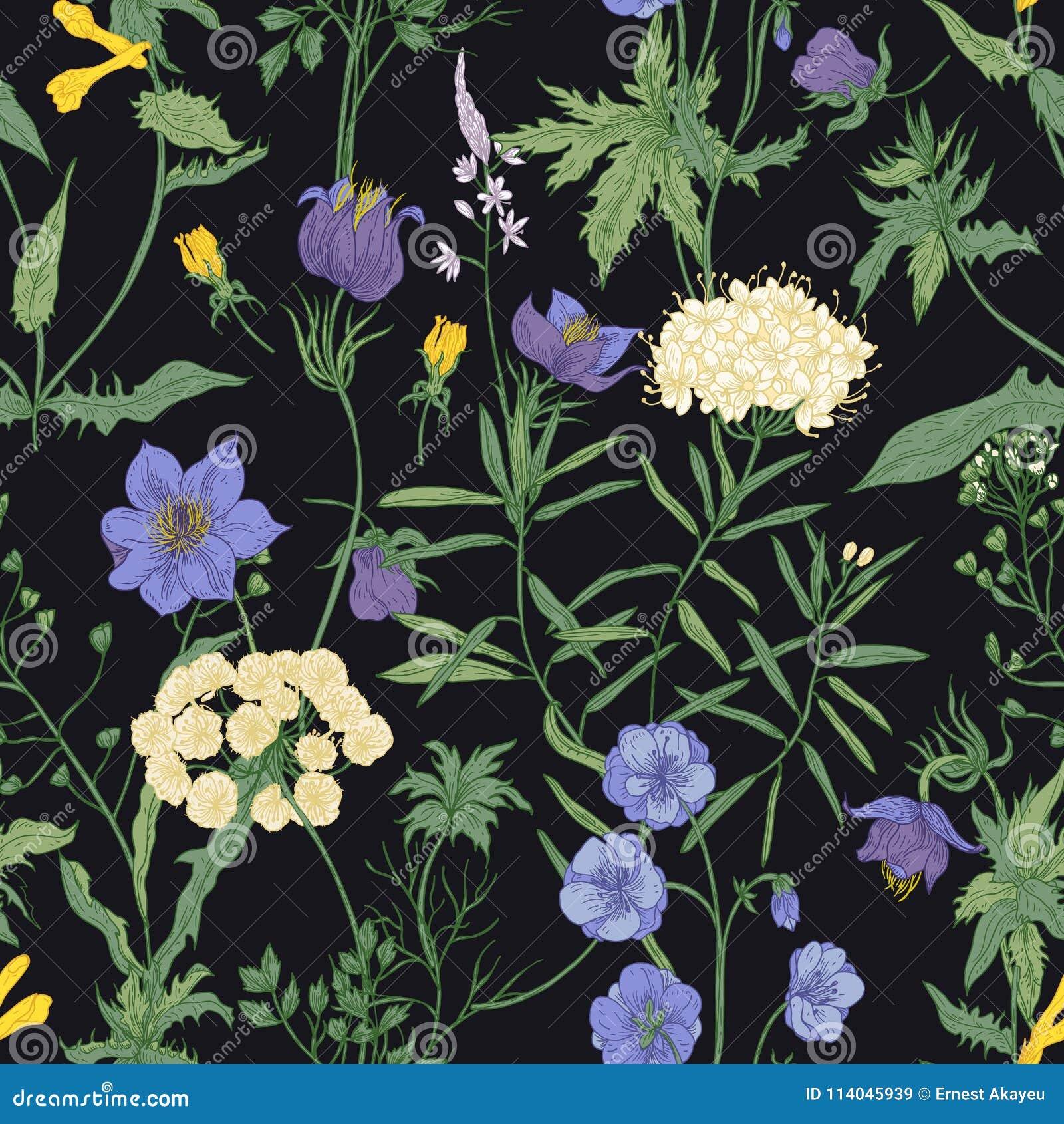 Modello senza cuciture floreale con i fiori selvaggi e le angiosperme di fioritura del prato su fondo nero floreale romantico
