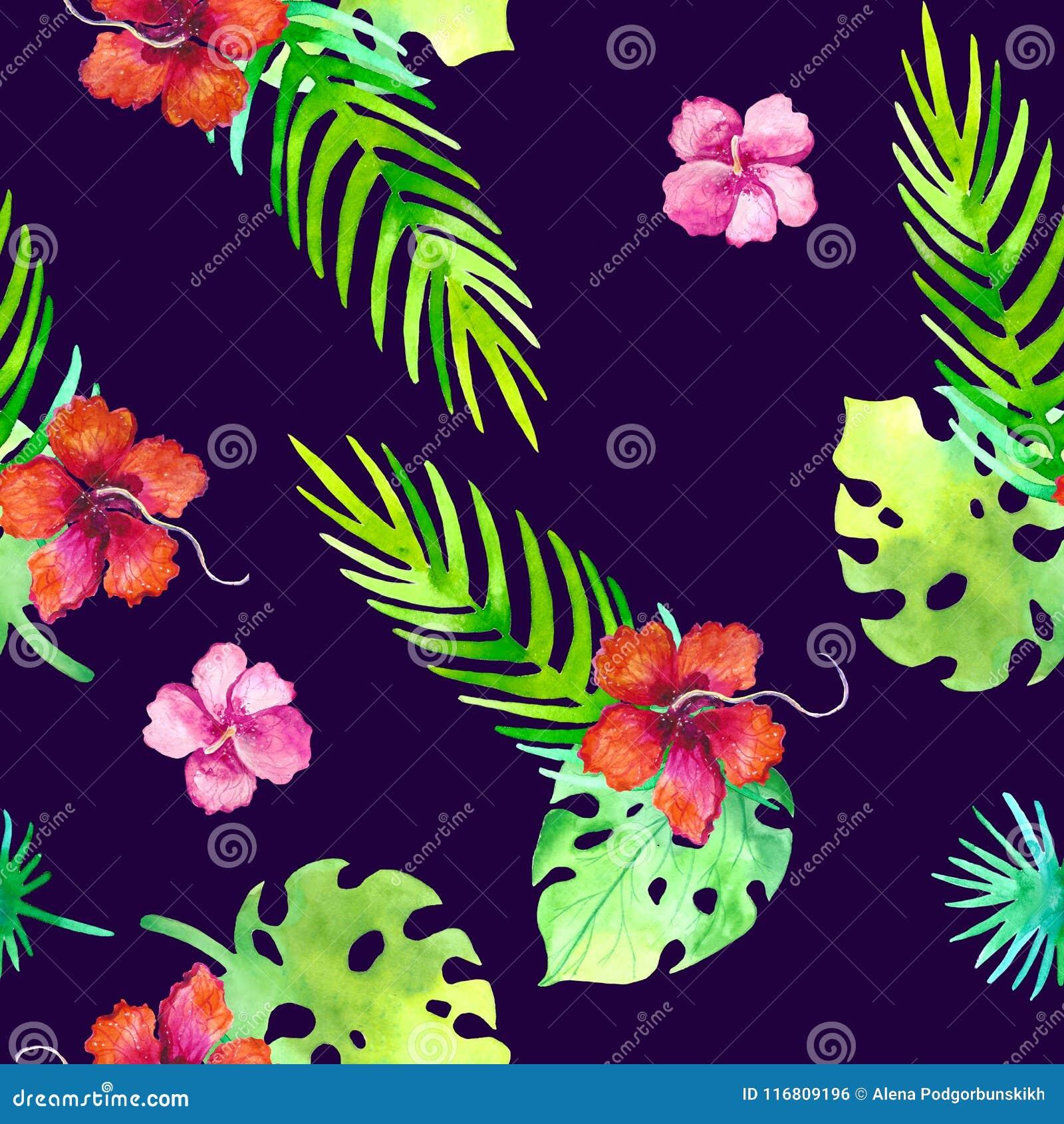 Modello tropicale senza cuciture di estate con gli elementi romantici floreali della giungla - protea e gibiscus Struttura senza
