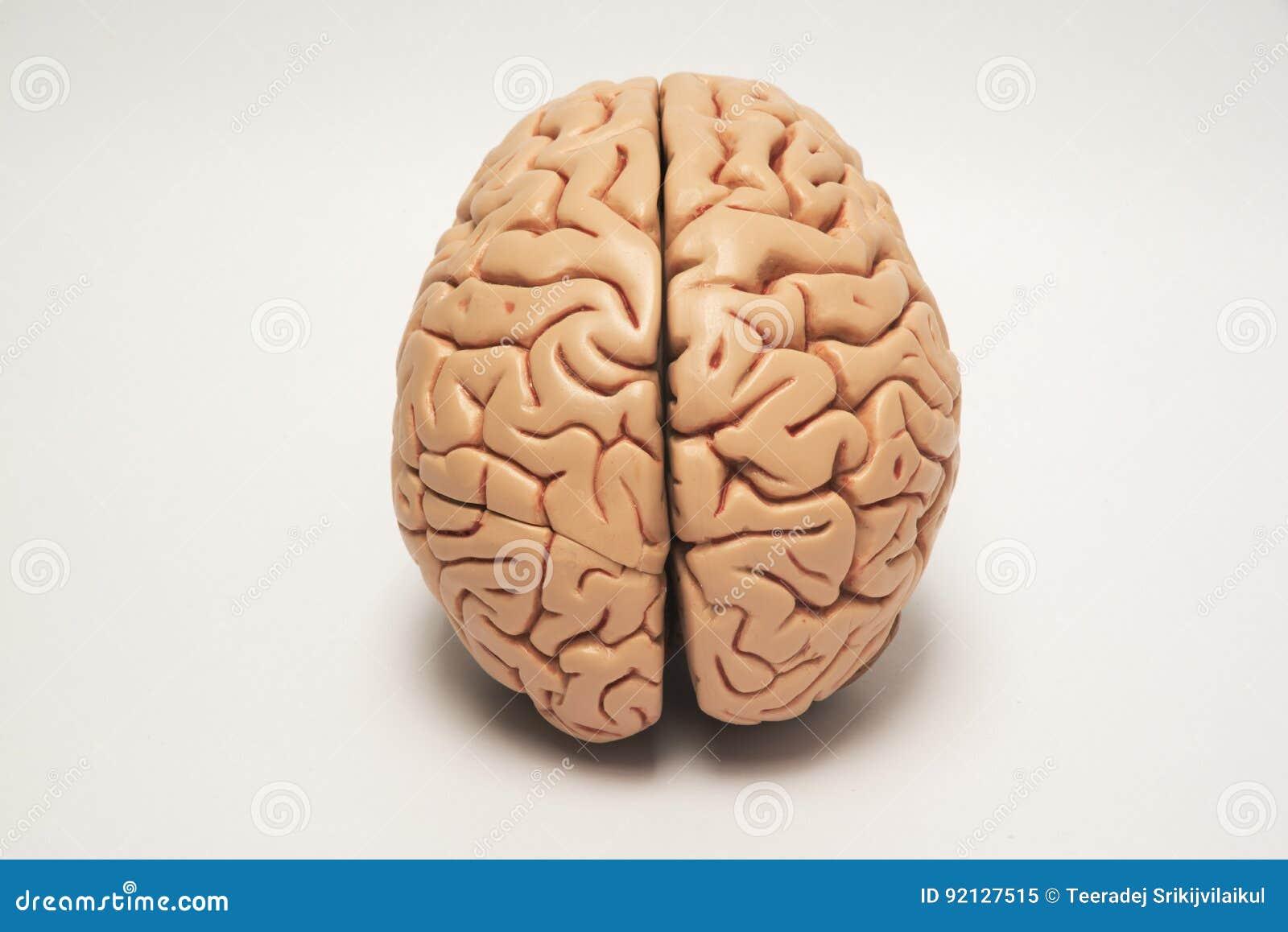 Modelo artificial do cérebro humano