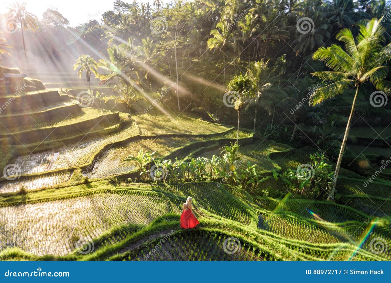 Modelo bonito no vestido vermelho no terraço 3 do arroz de Tegalalang