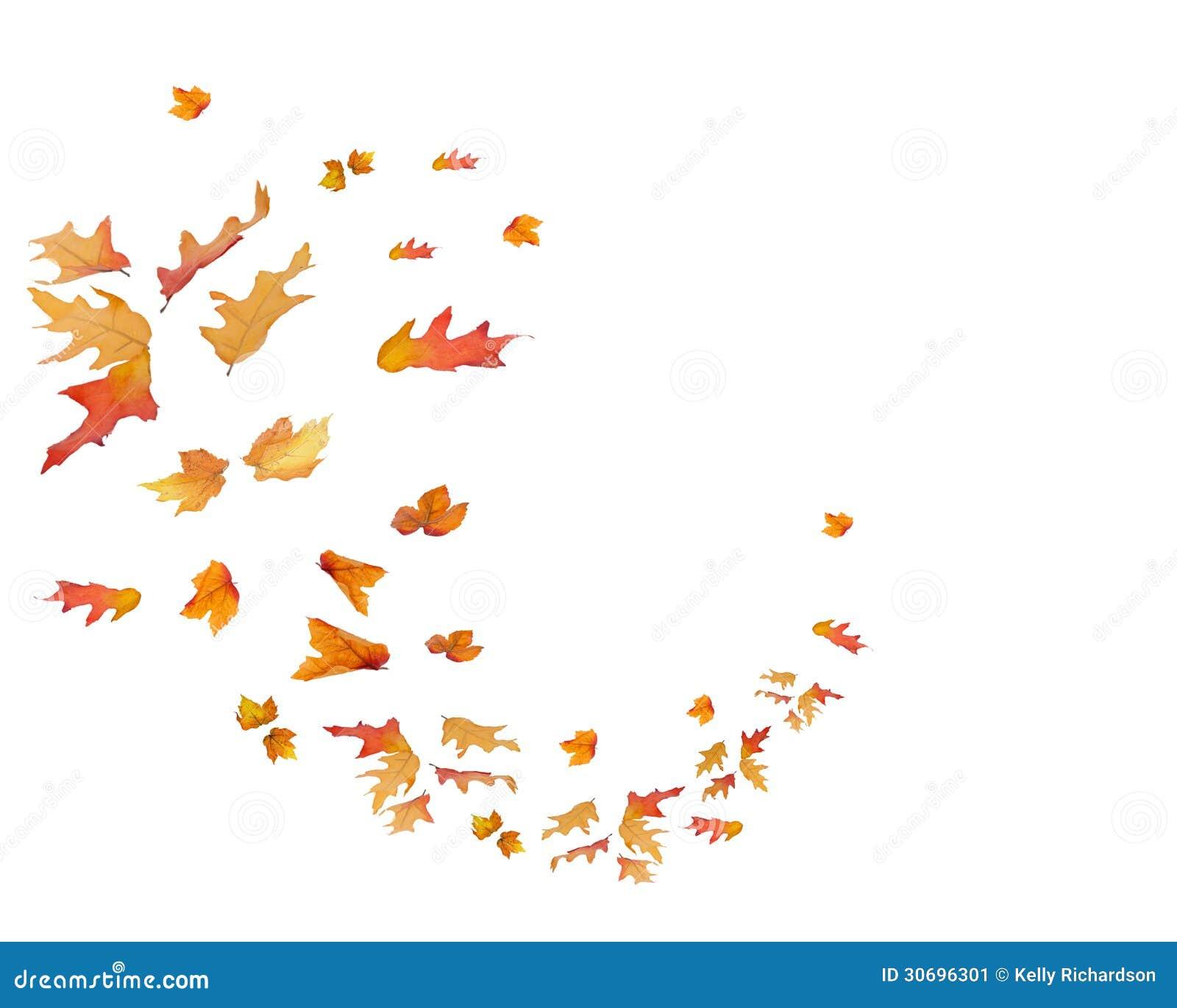 Modelo circular de las hojas de la caída aisladas
