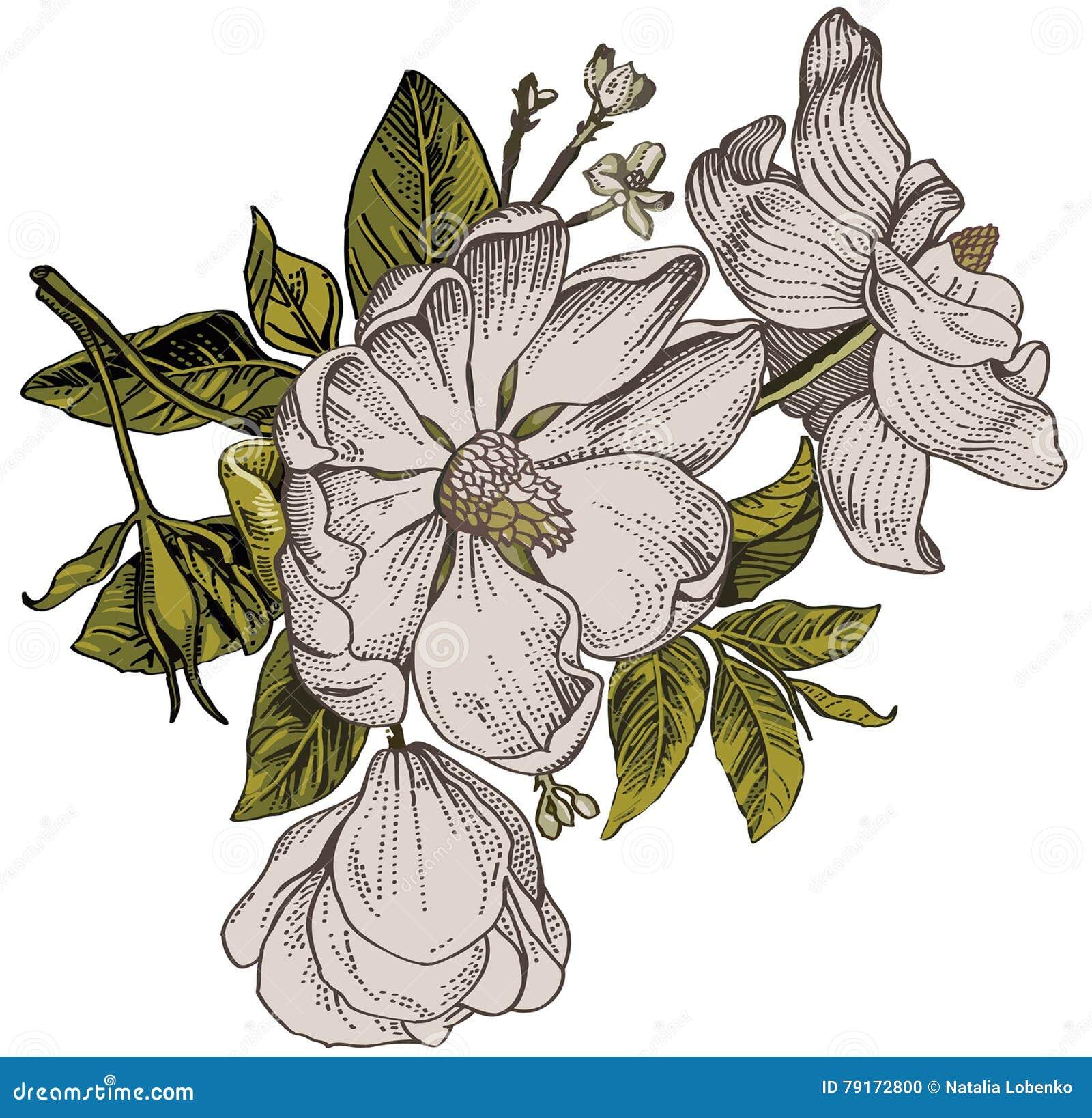 Modelo De Flores Realista Barroco Del Vintage Dogrose De Rose