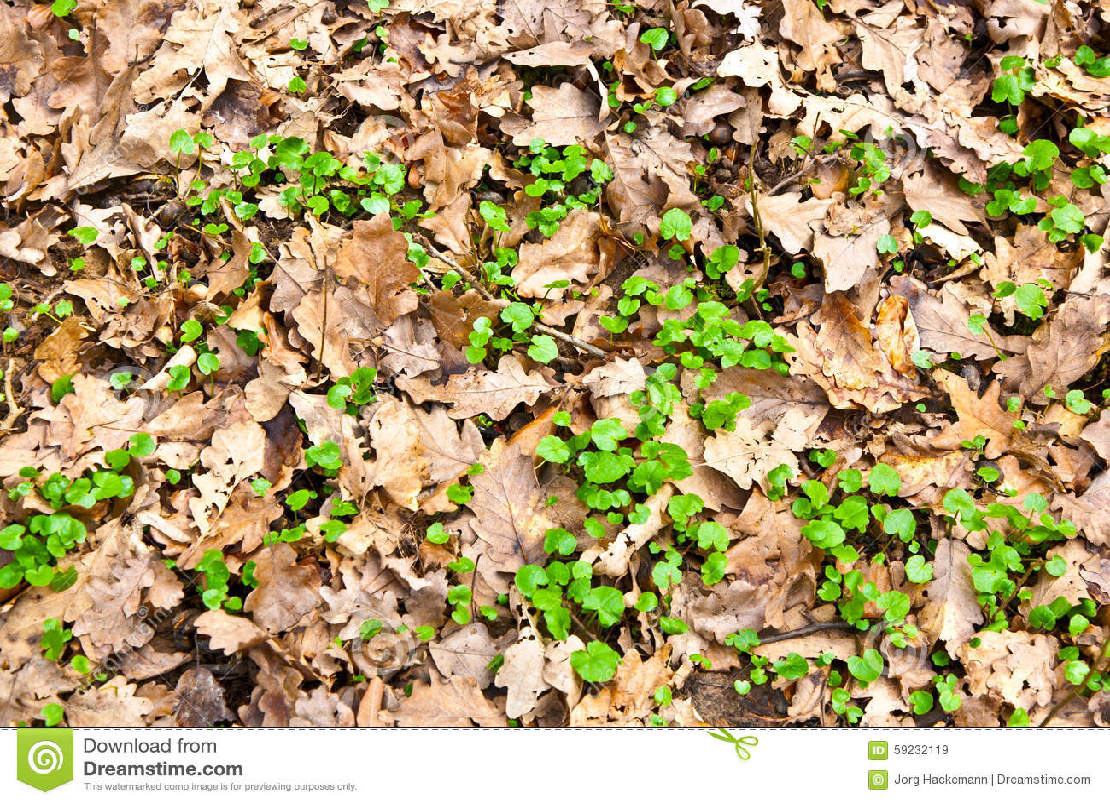 Modelo de hojas