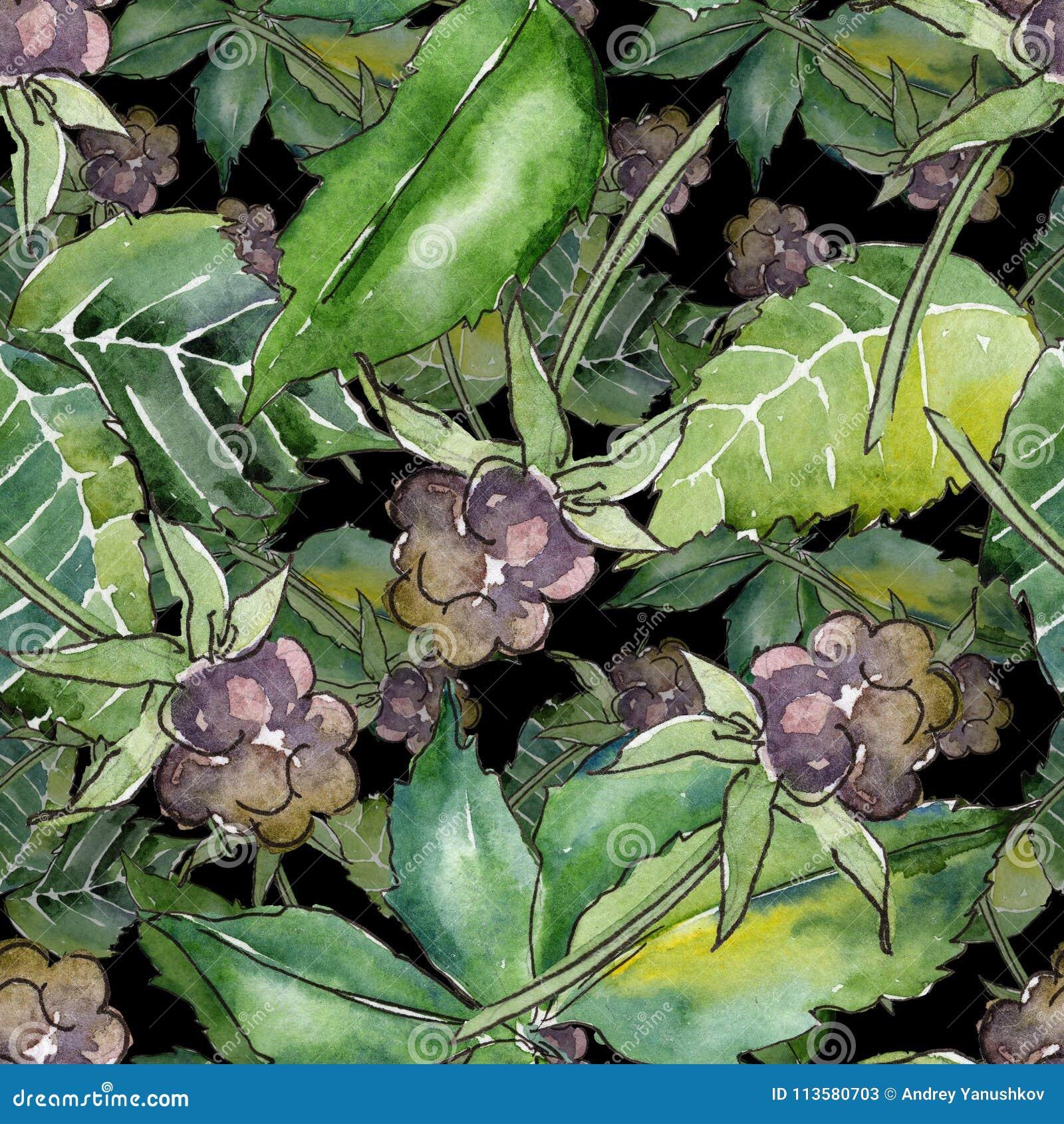 Modelo de la hoja de Blackberry Follaje floral del jardín botánico de la planta de la hoja