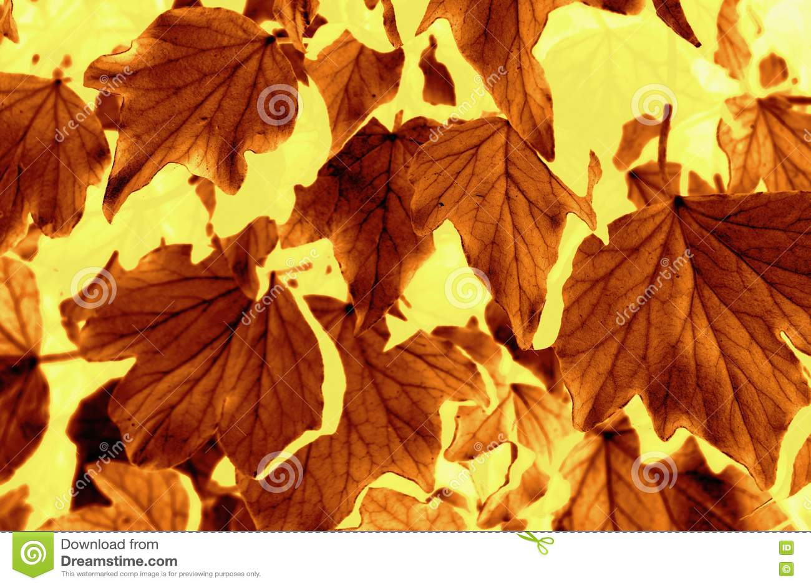 Modelo de la hoja del otoño