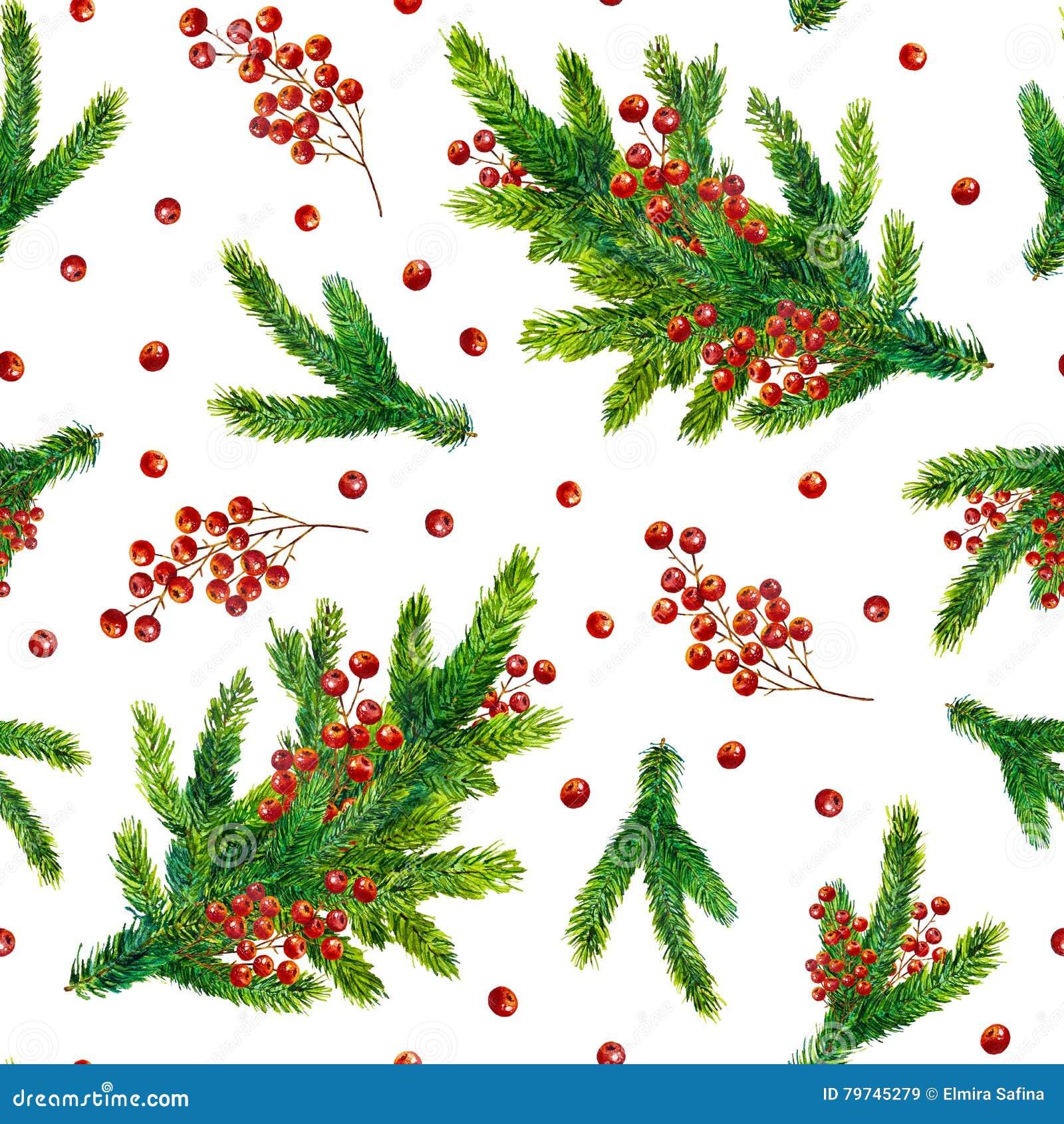 Modelo de la Navidad de la acuarela con las ramas del abeto y las bayas rojas