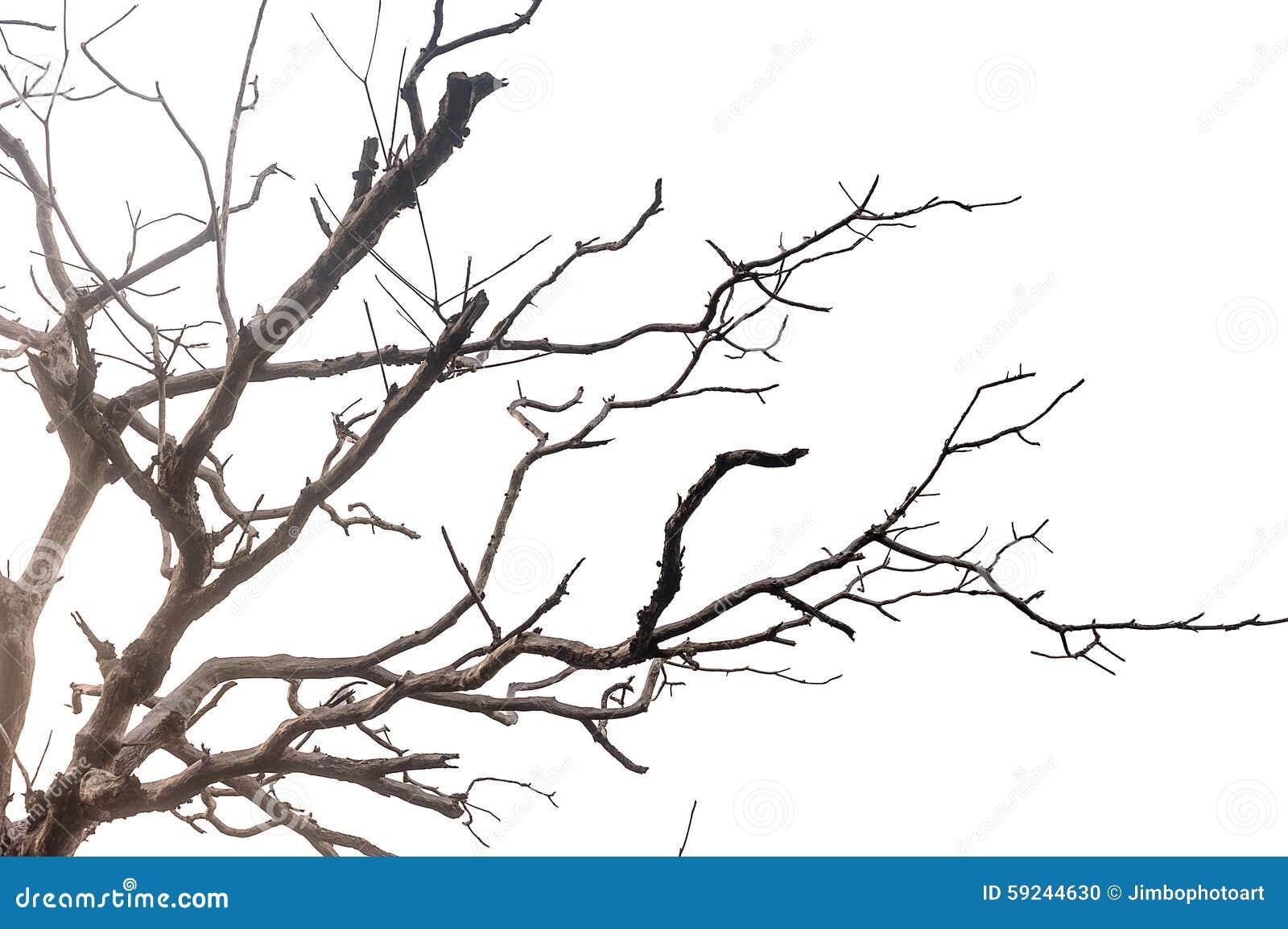 Modelo de los muertos del árbol aislados