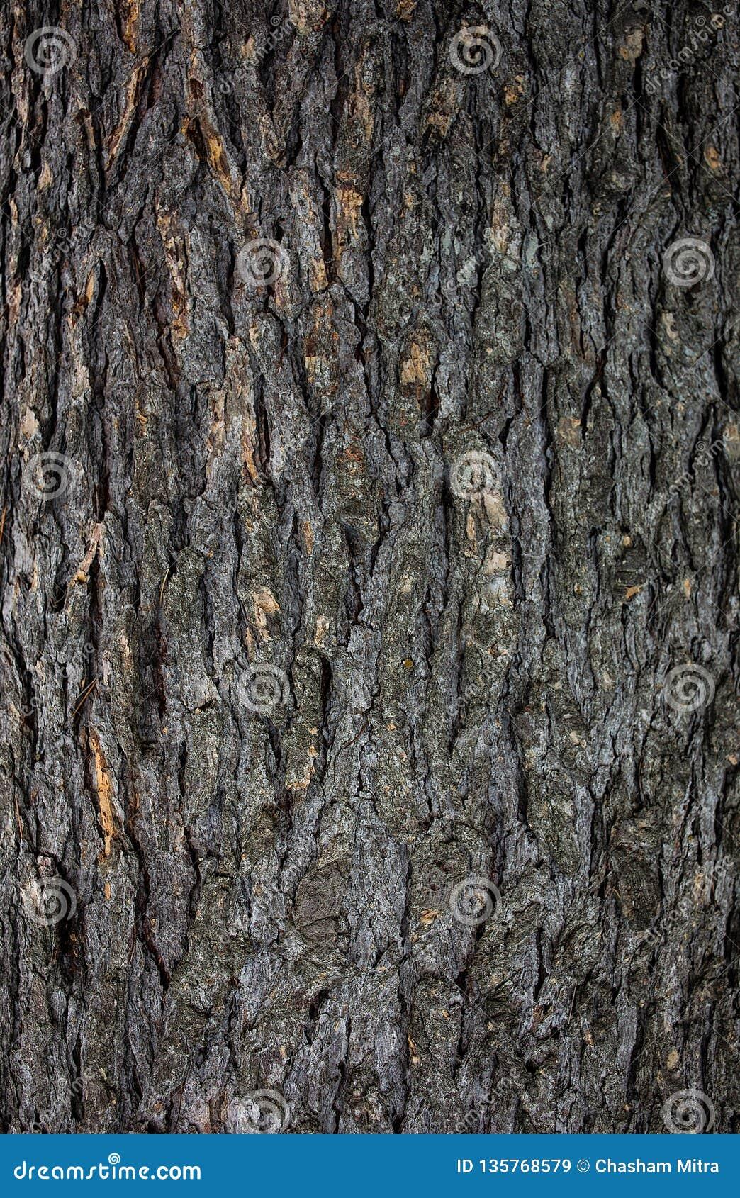 Modelo de madera en un árbol