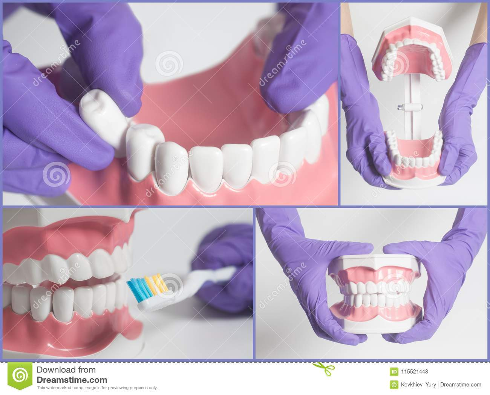 Modelo Del Ser Humano De Los Dientes Concepto Del Cuidado Dental ...