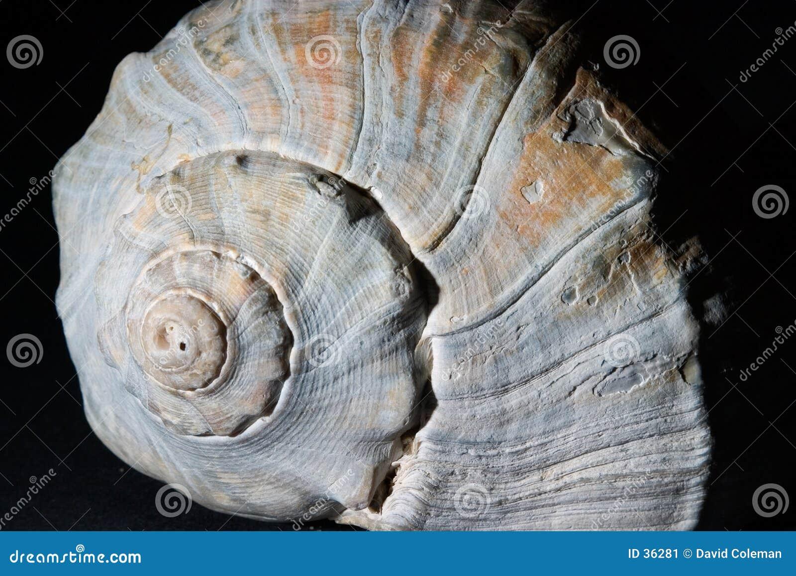 Modelo del shell