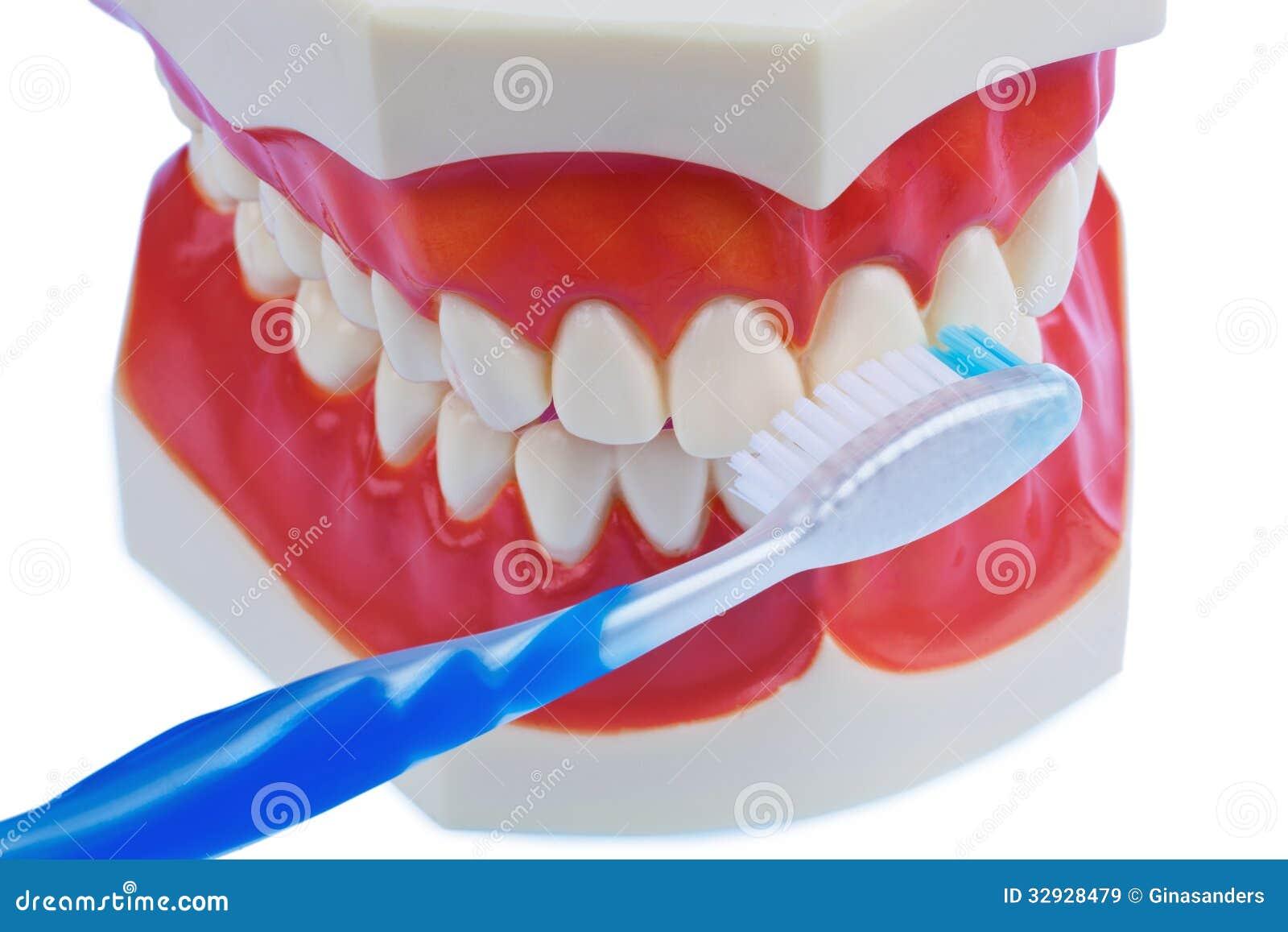 Modelo dental com uma escova de dentes ao escovar os dentes