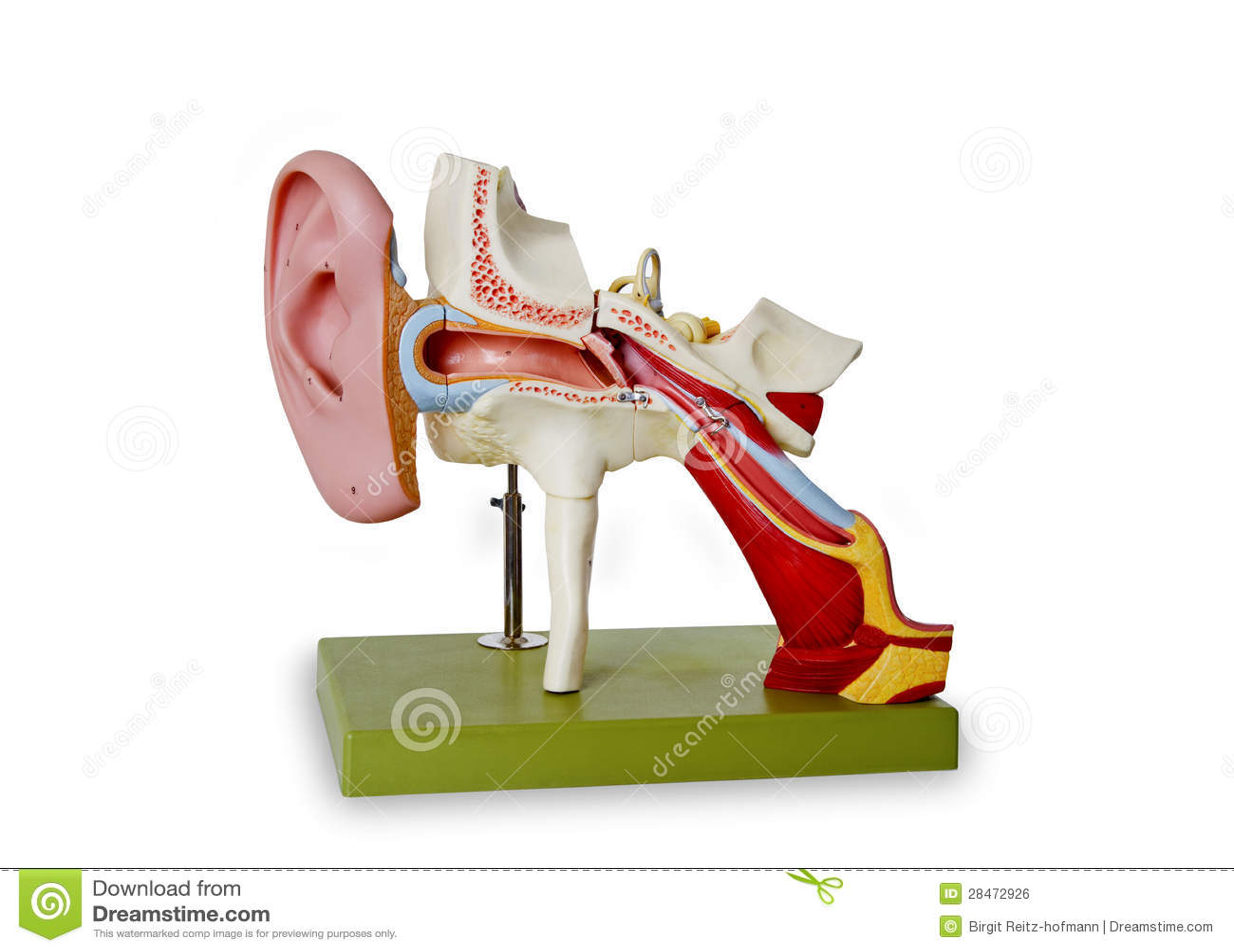 Modelo do canal auditivo