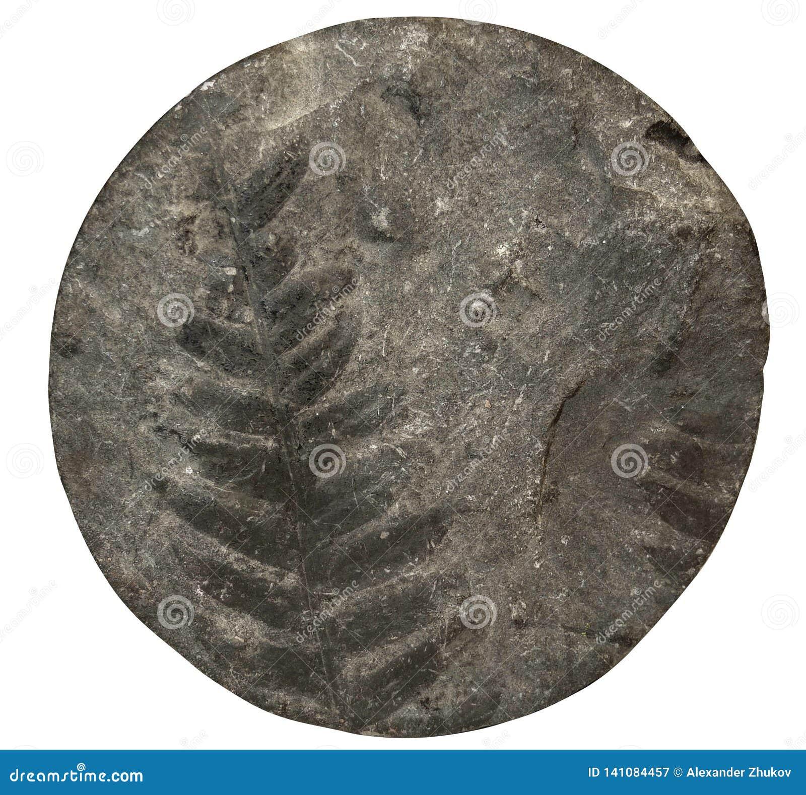 Modelo fósil del helecho de la planta en la superficie de piedra, base del taladro Front View