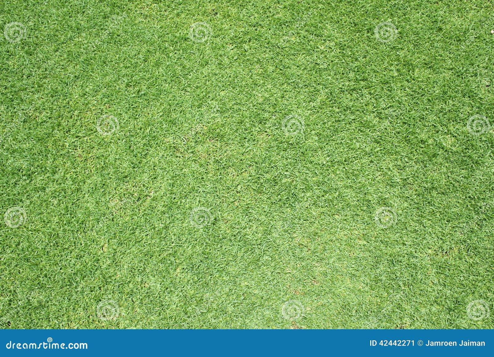 Modelo hermoso de la hierba verde del campo de golf
