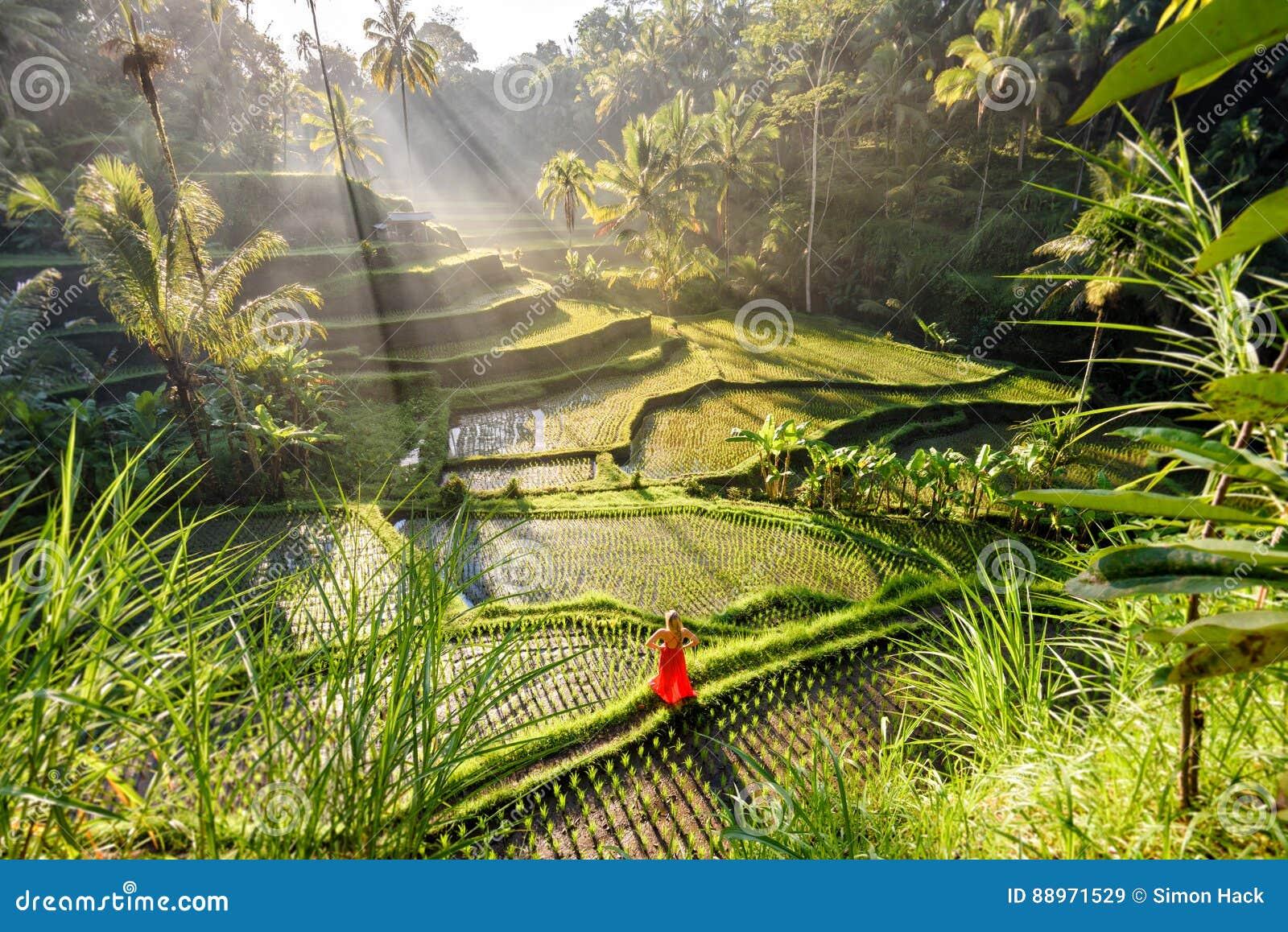 Modelo hermoso en vestido rojo en la terraza 7 del arroz de Tegalalang
