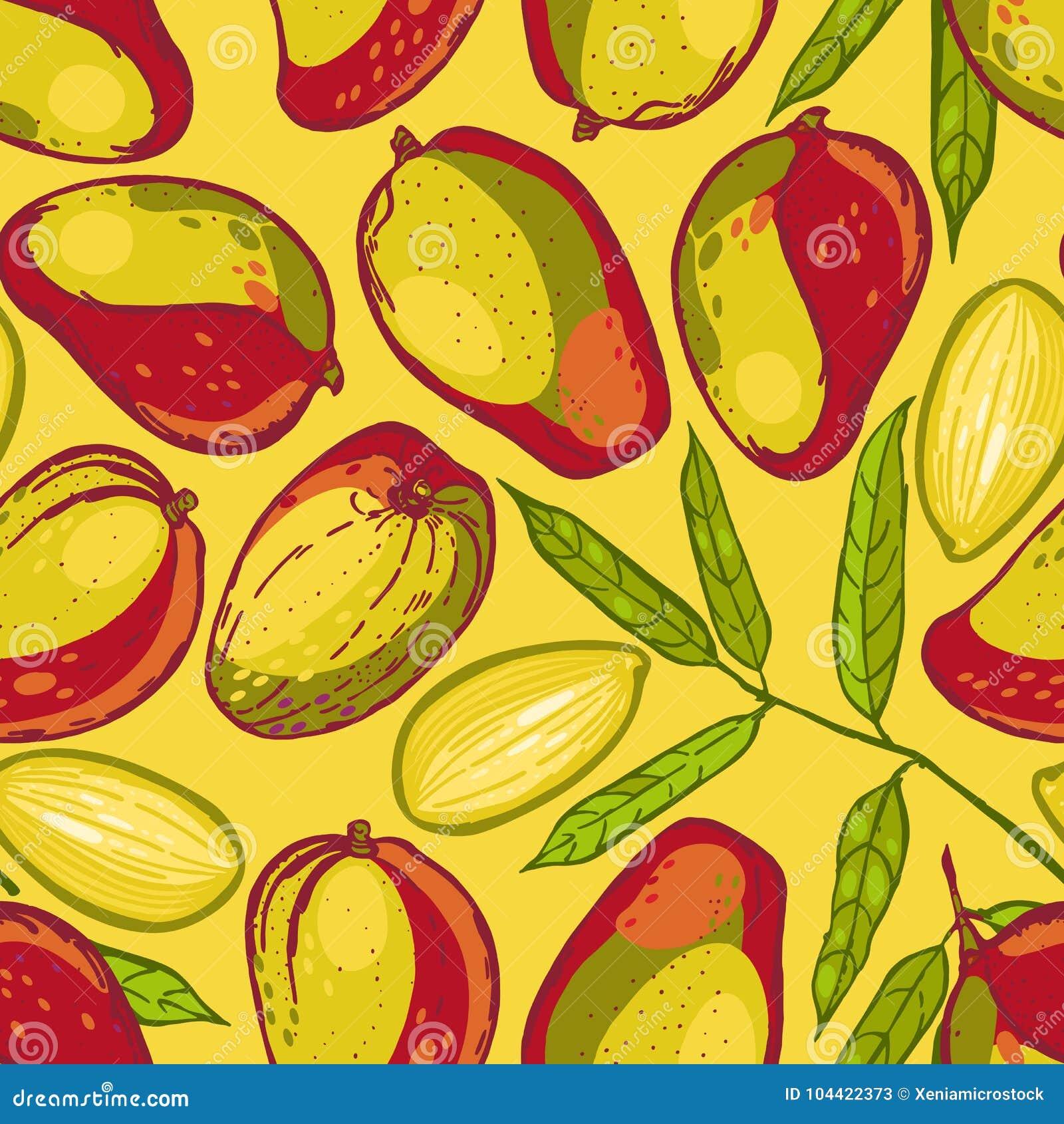 Modelo inconsútil con el mango Colección de mangos Fruta tropical Fondo dibujado mano de la comida
