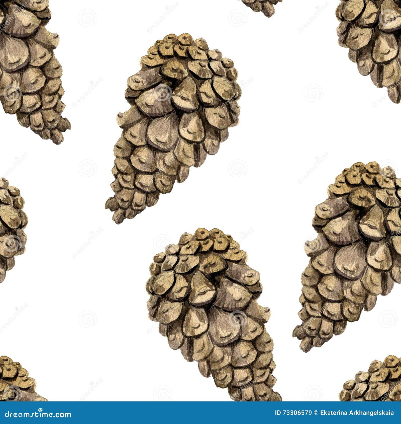 Modelo inconsútil con los conos del pino del dibujo de la acuarela