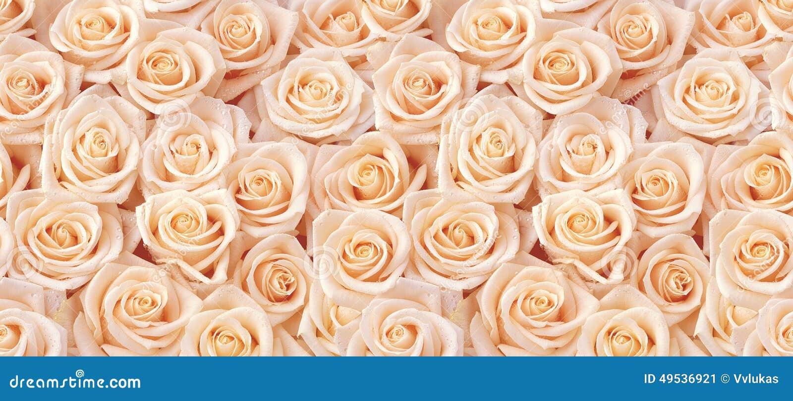 Modelo inconsútil de las rosas beige