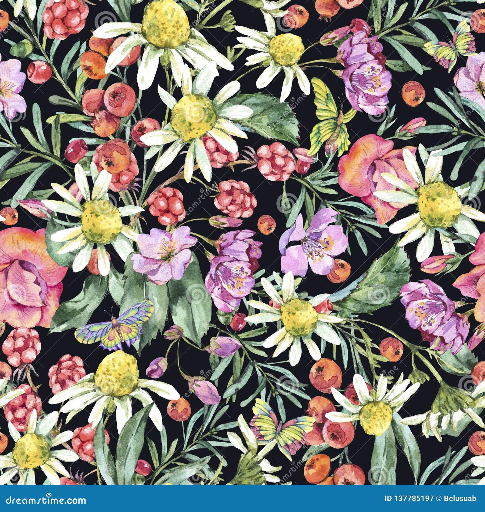 Modelo inconsútil del verano de la acuarela con la manzanilla, las bayas, los Wildflowers, Blackberry y las mariposas