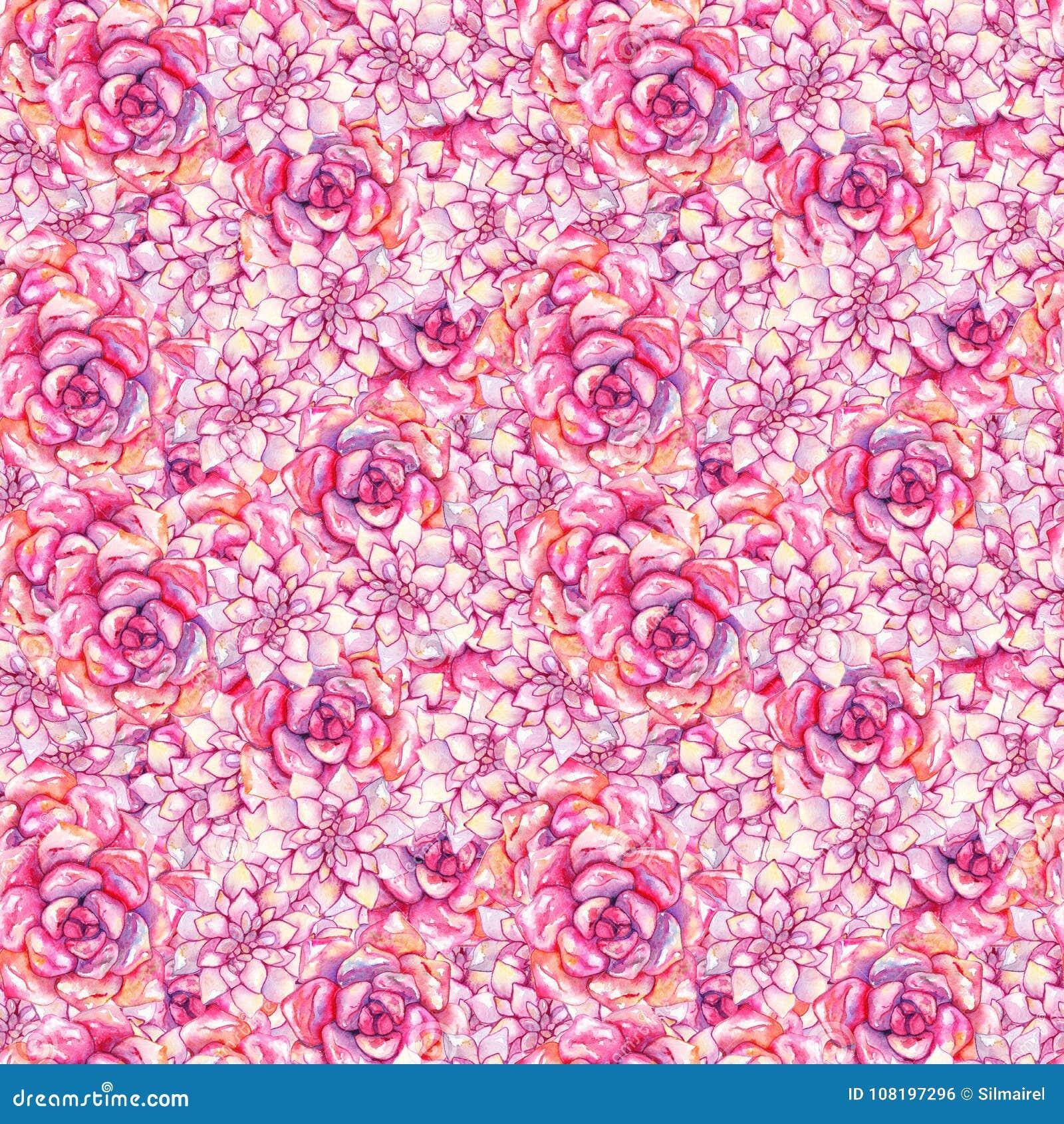 Modelo inconsútil dibujado mano color de rosa rosada de la planta de la flor del succulent del echeveria de la acuarela