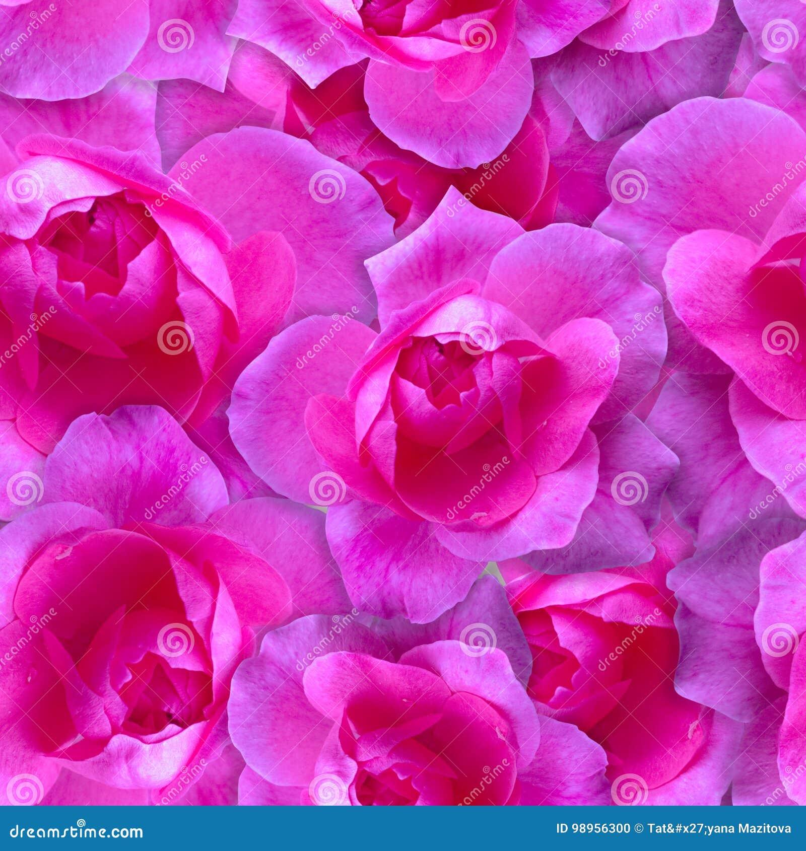 Modelo rosado de Rose Fondo hermoso de la flor inconsútil