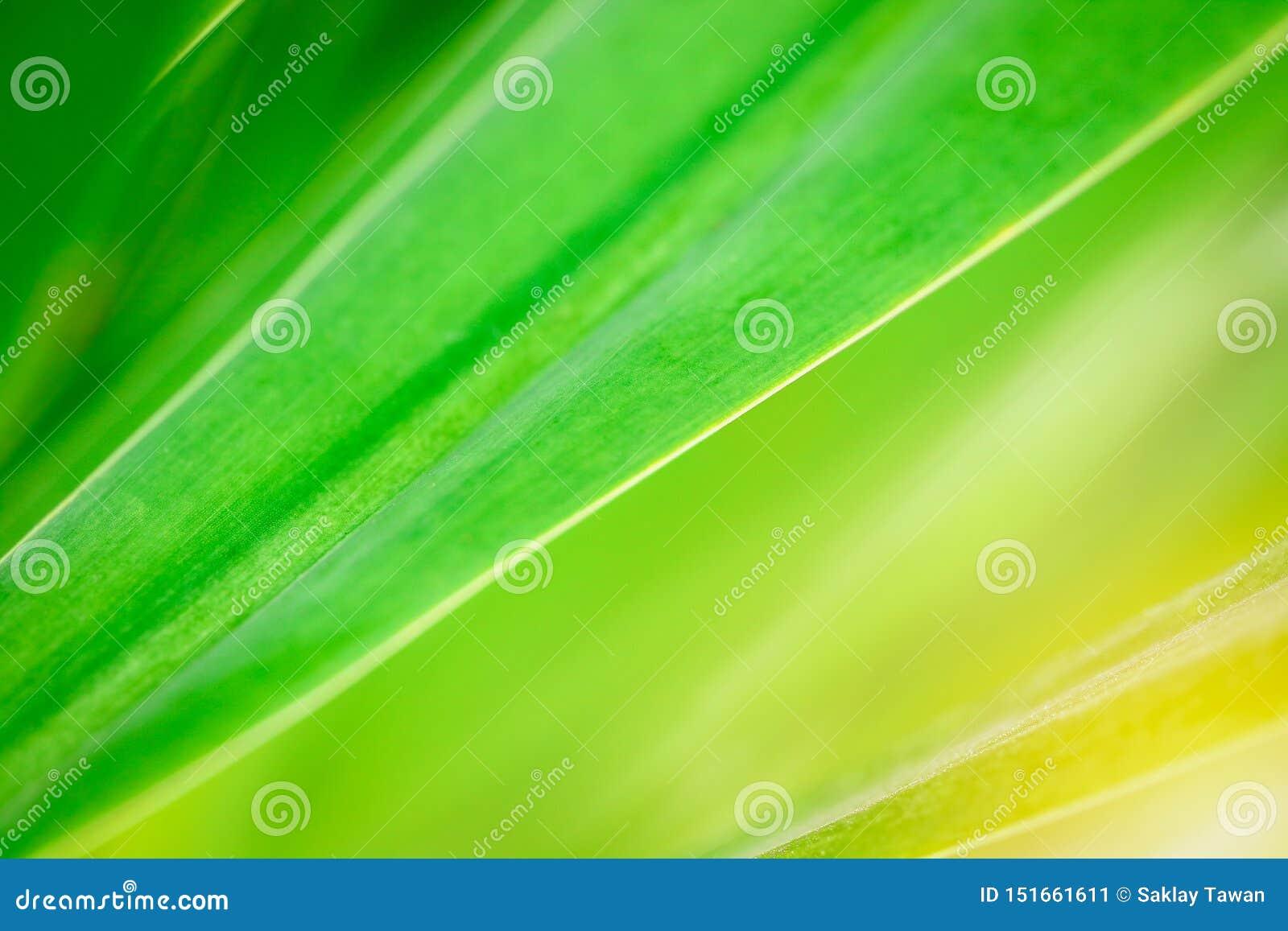 Modelo verde de la hoja en naturaleza