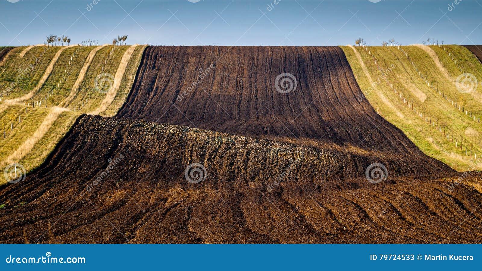 Modelos asombrosos de la raya en campos agitados de Moravia del sur