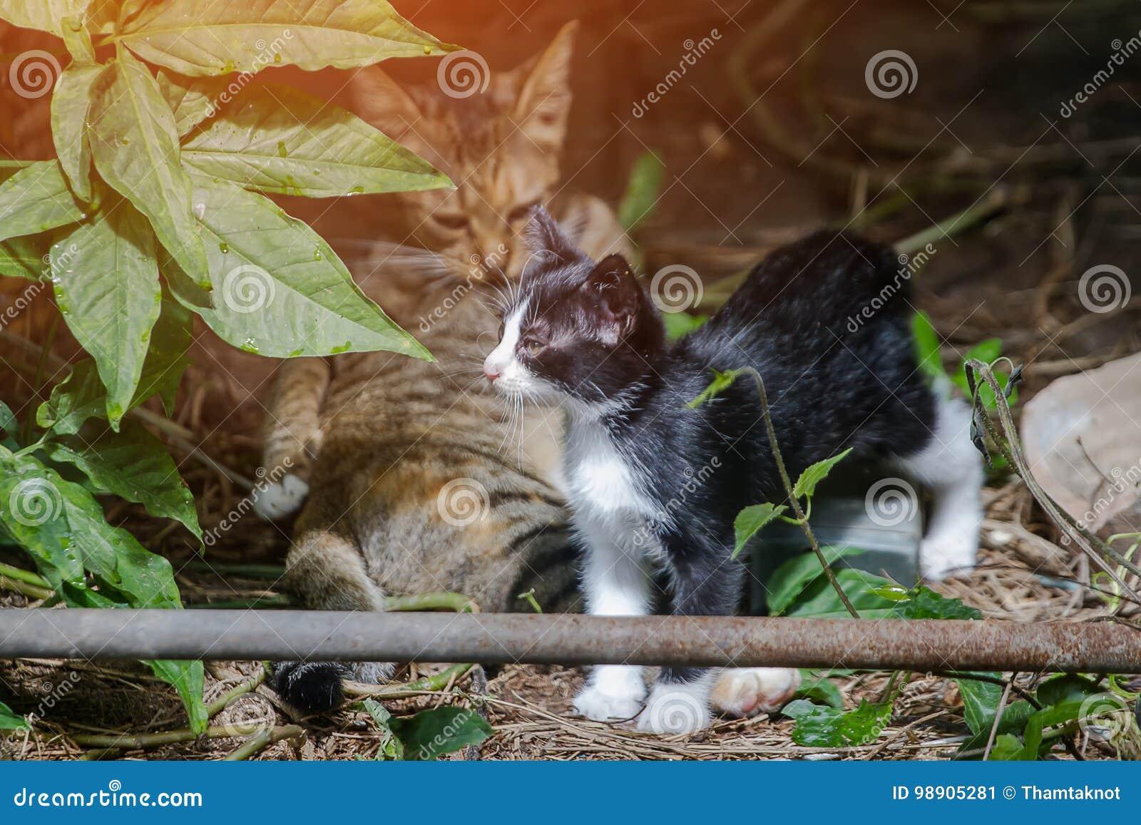 Moderkatten som slickar rengöringsmedlet själv och, håller ögonen på spela för kattungar som är styggt